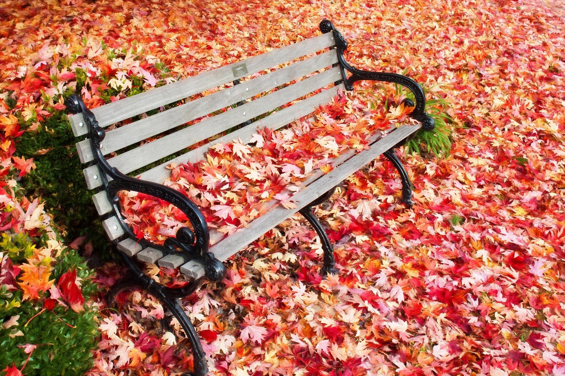In autumn photo