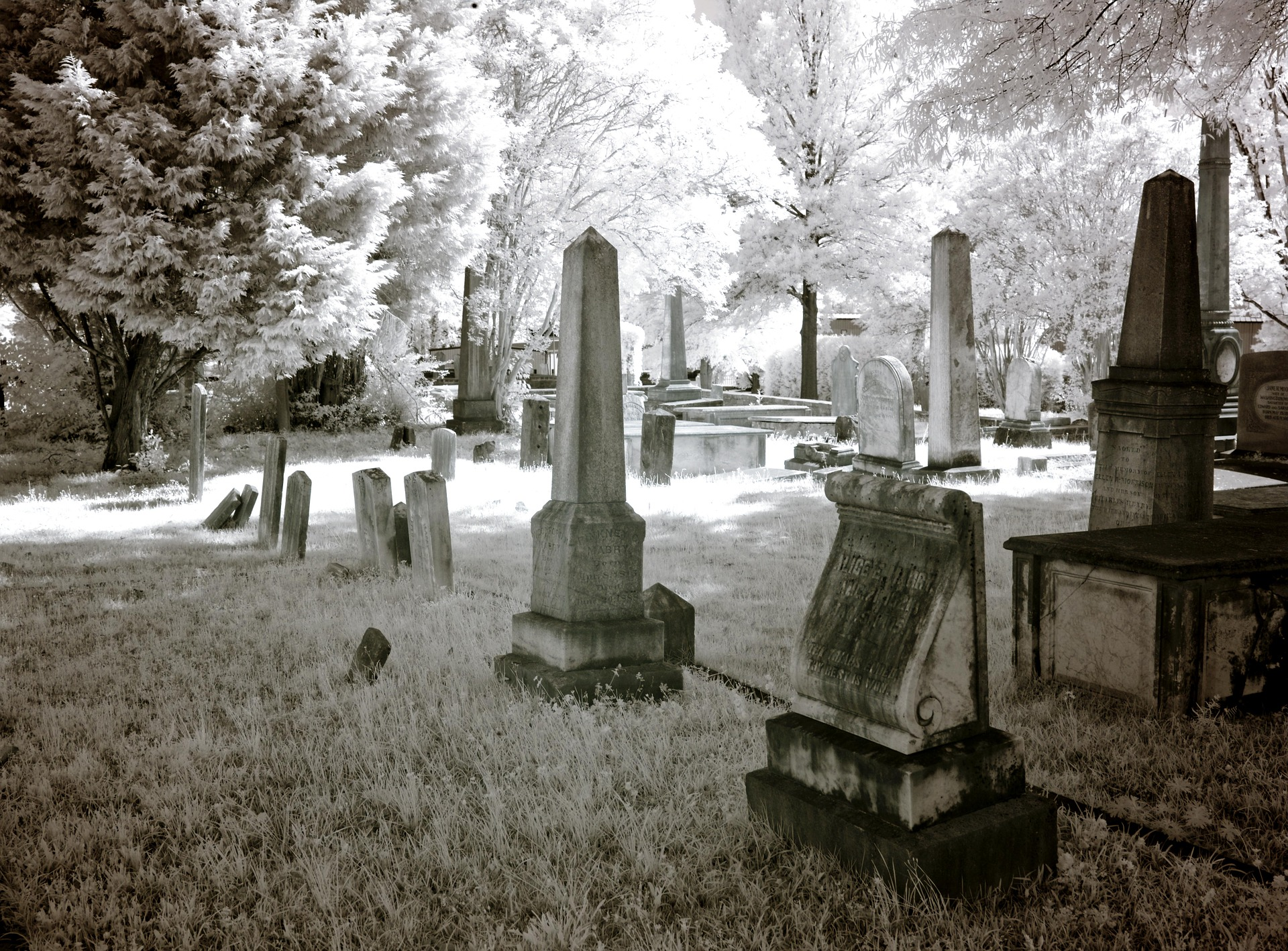 In the cemetery photo