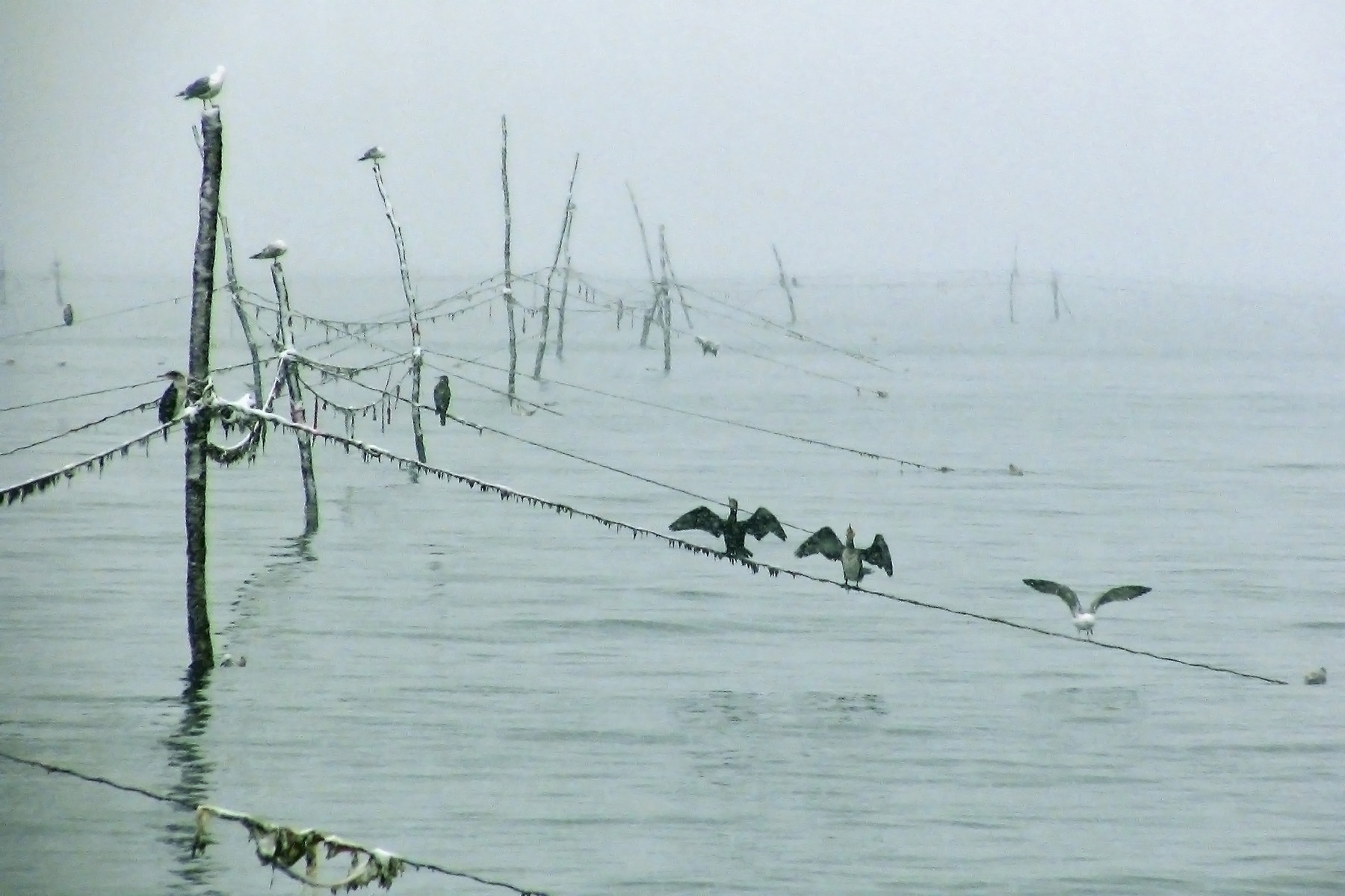 In the Fog, Poles, Water, Ocean, Mist, HQ Photo