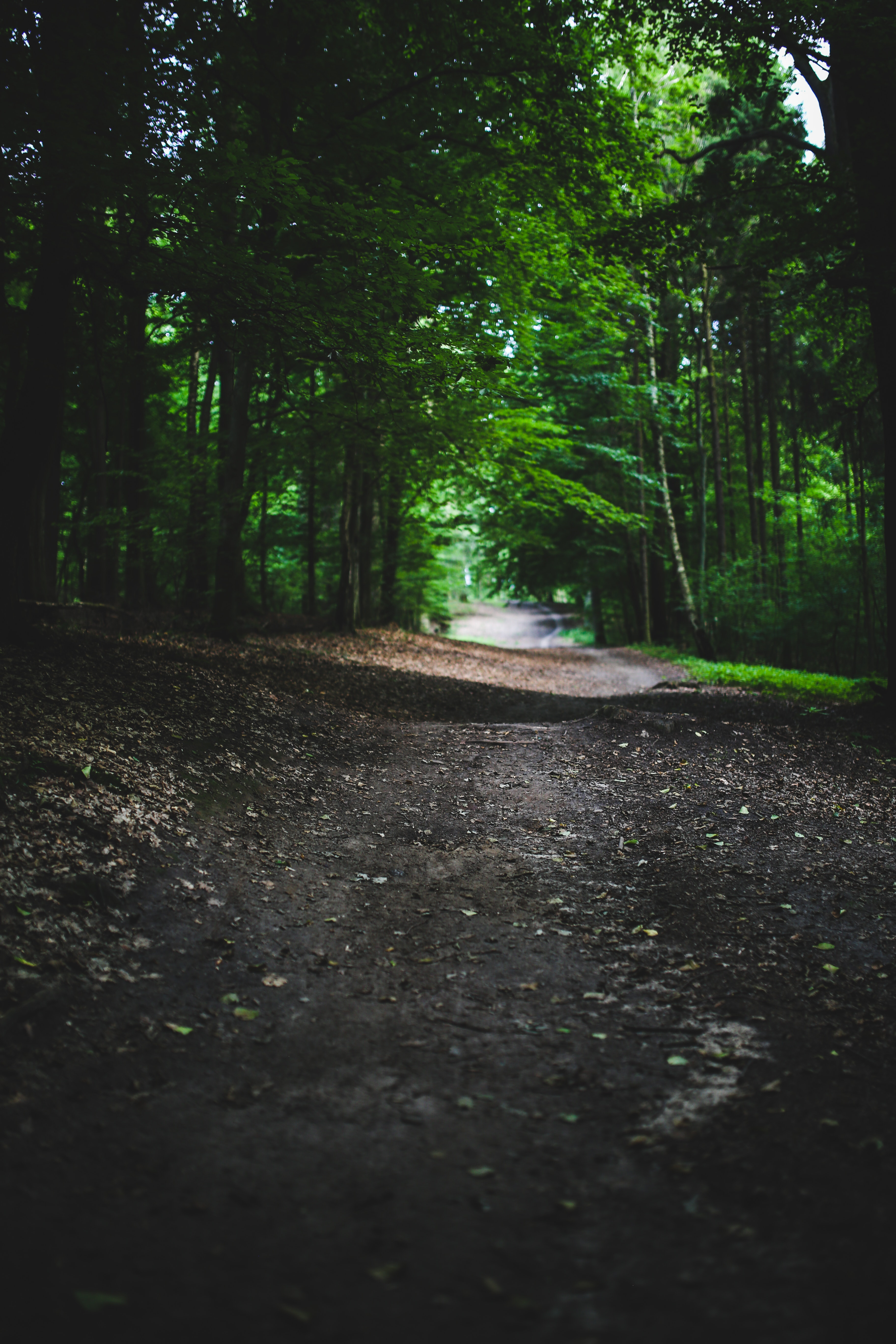 In the woods, Brownish, Park, Wood, Way, HQ Photo