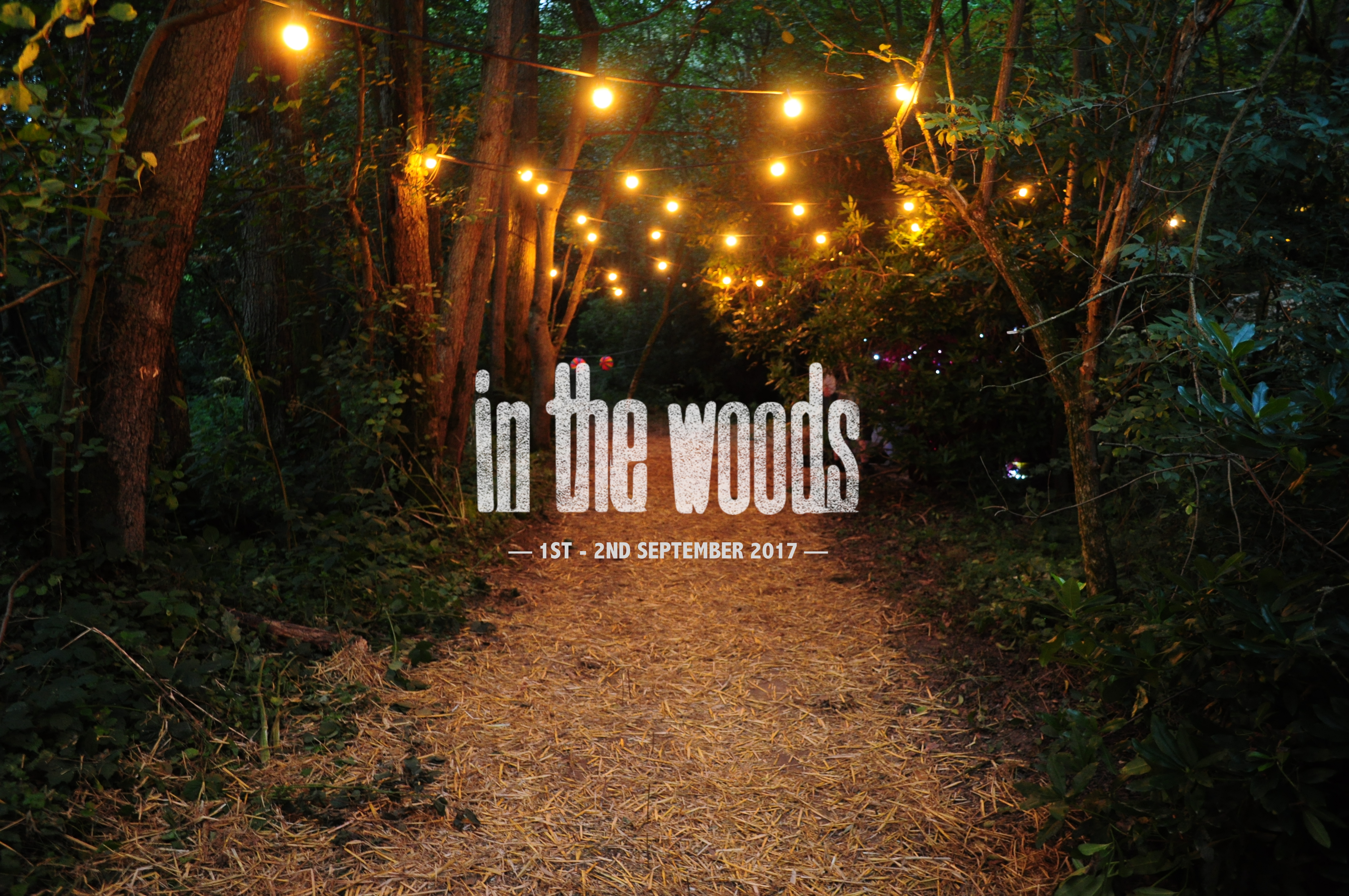 In the woods photo