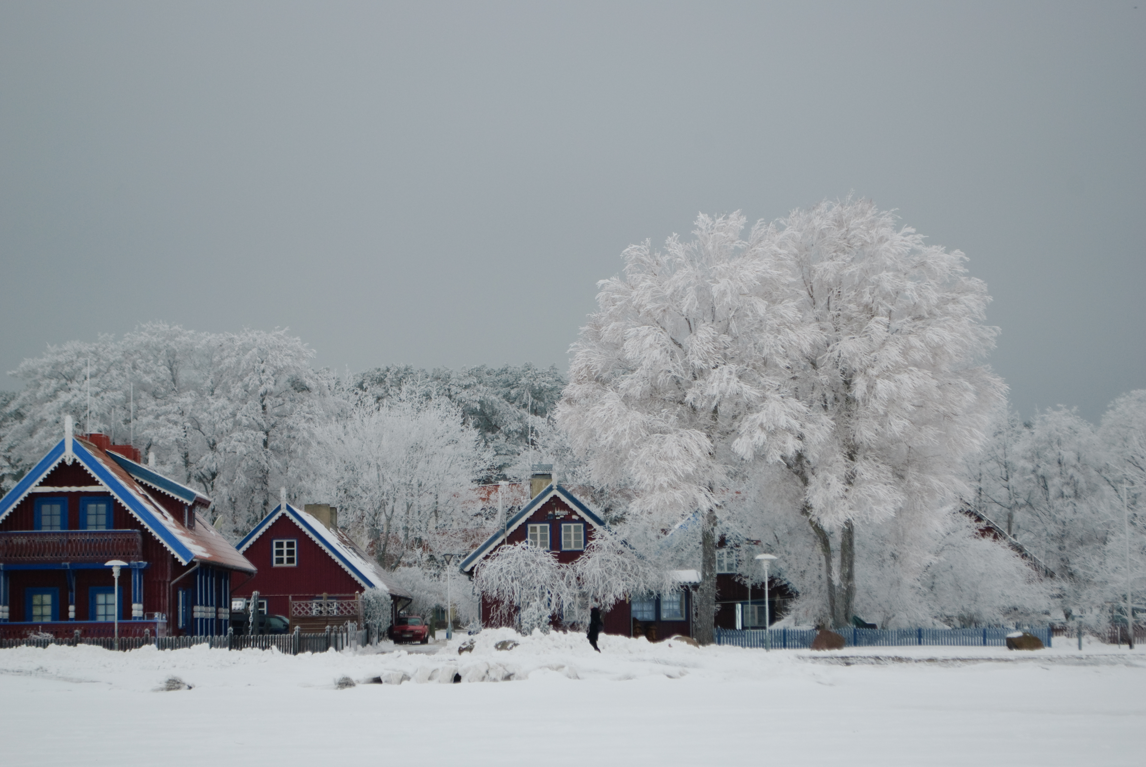 In winter photo