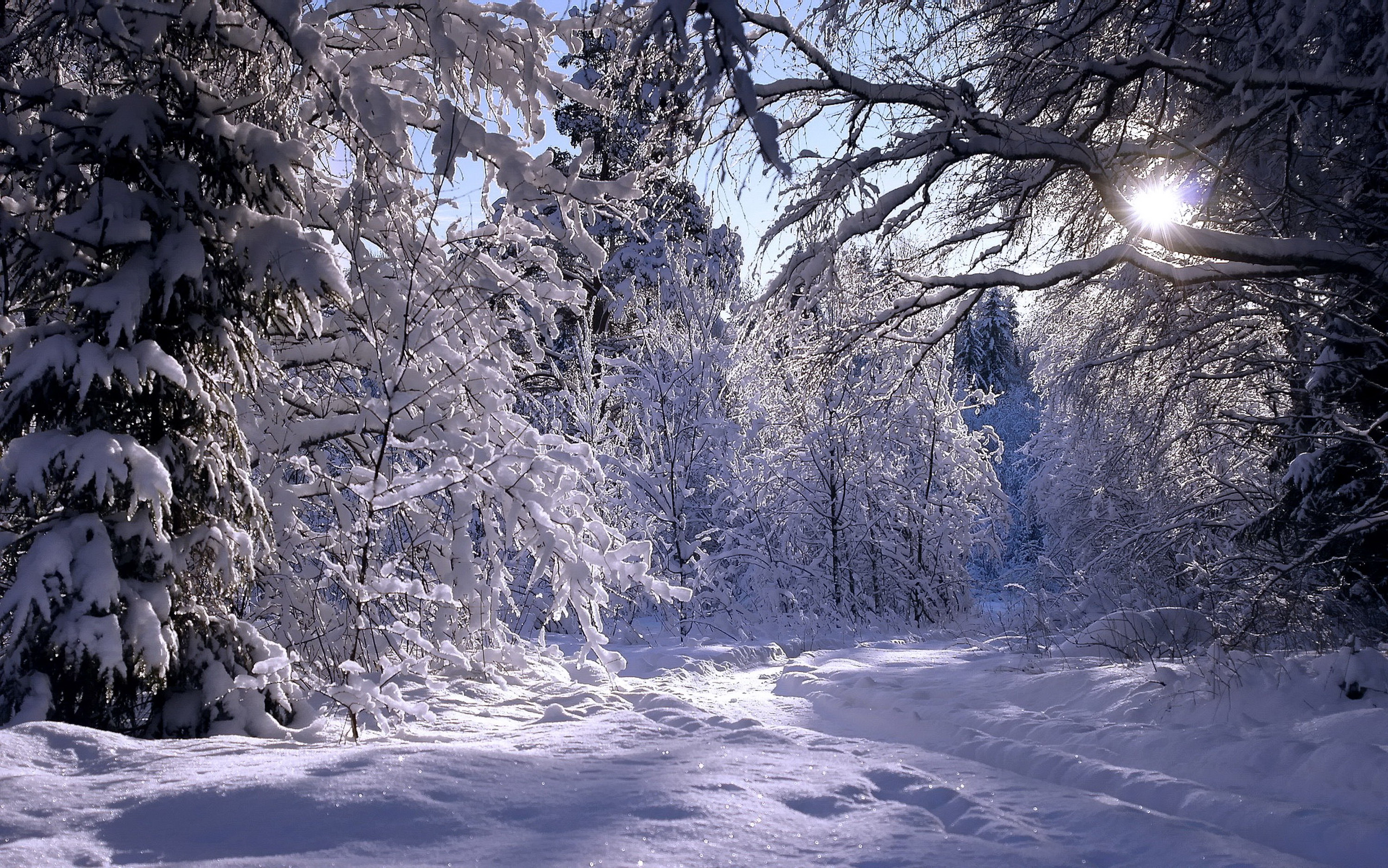 Rambling in winter forest / 3000 x 1875 / Forest / Photography ...