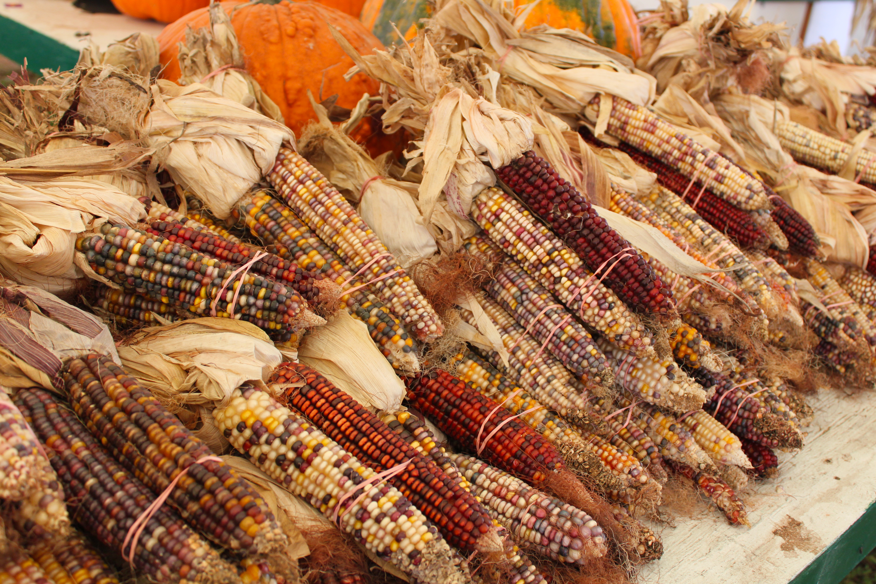 Indian corn, Agriculture, Organic, Maize, Market, HQ Photo