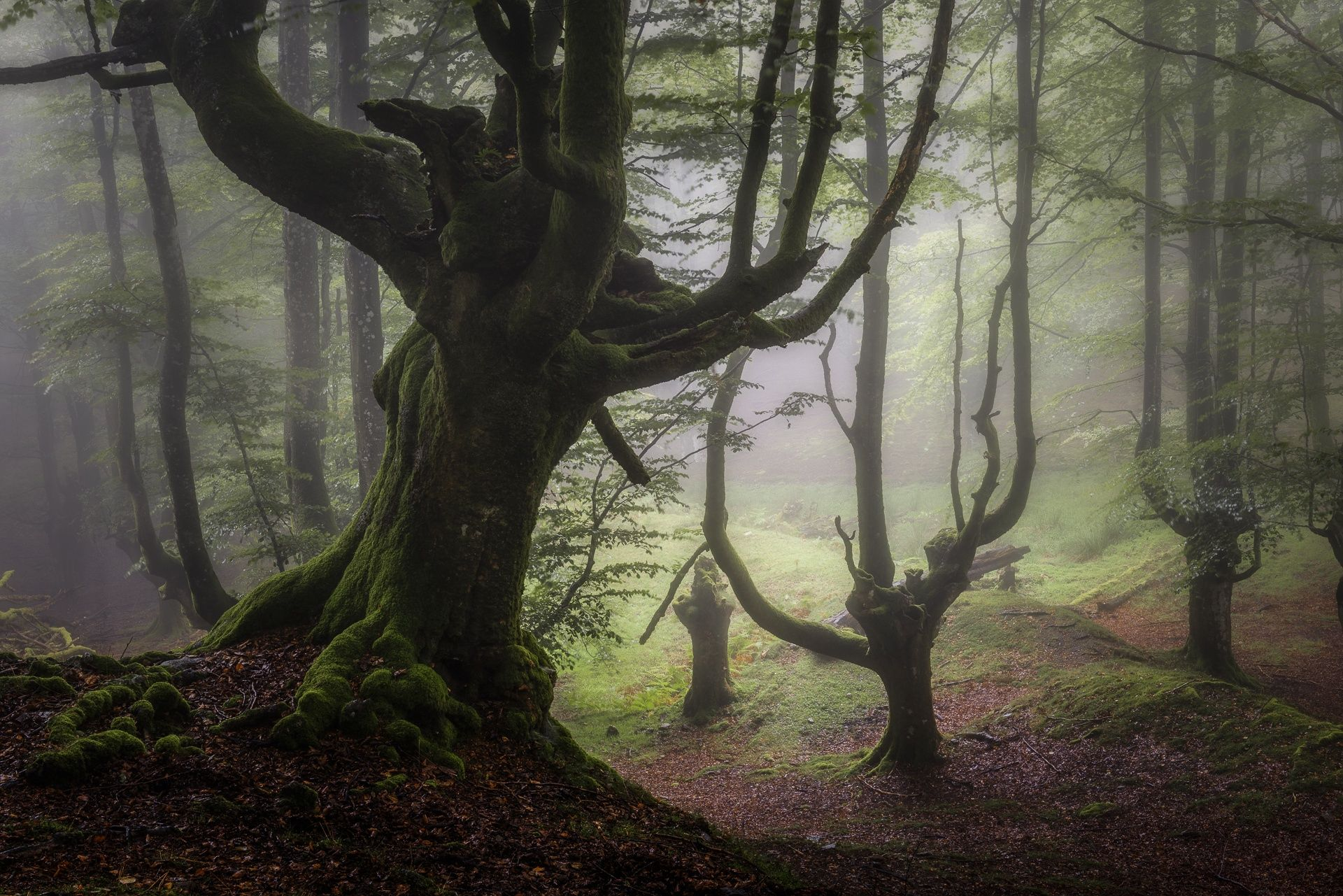 INSIDE THE FOREST by Jesús Ignacio Bravo Soler on 500px. Looks like ...