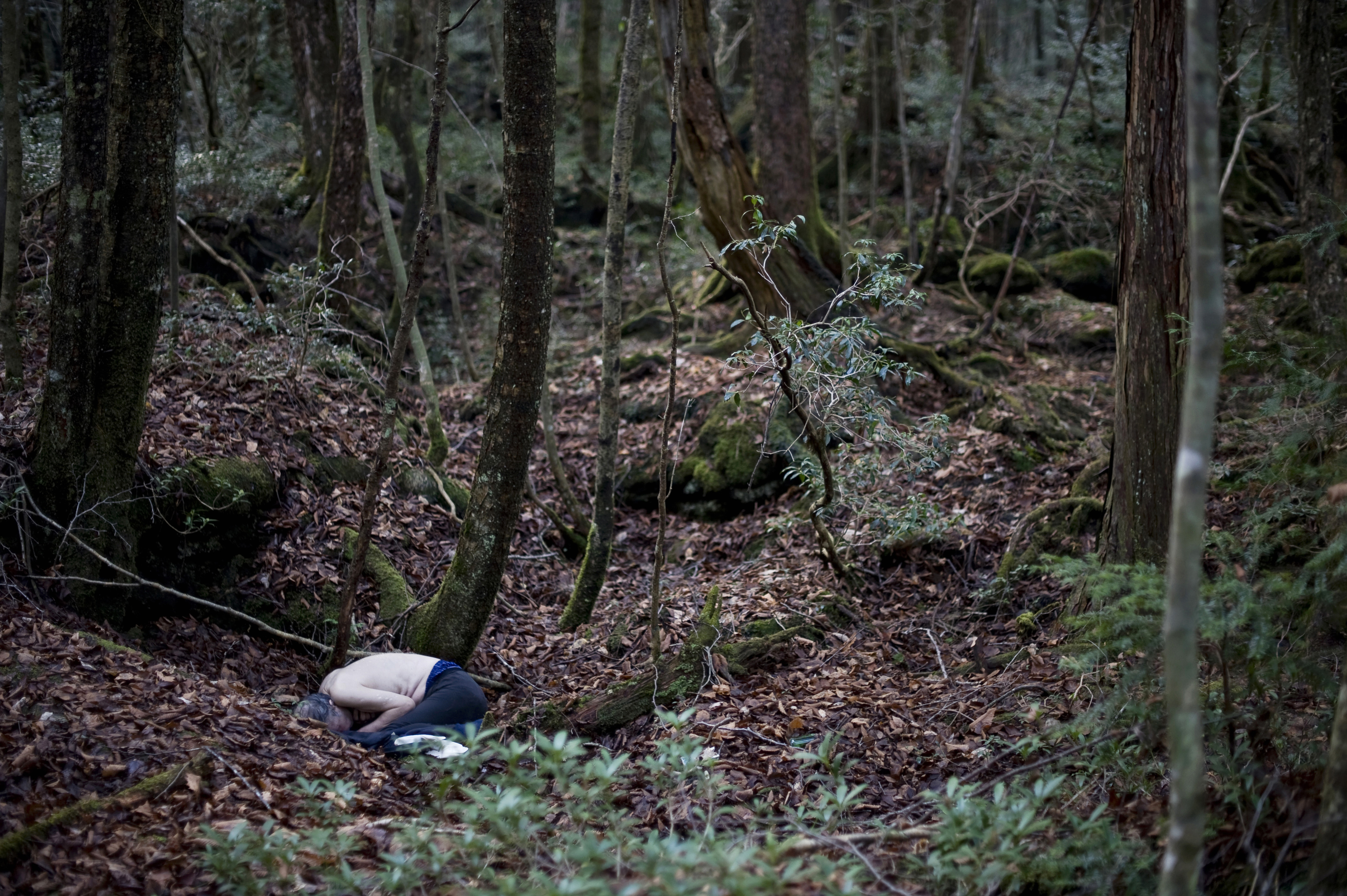Inside Japan's 'Suicide Forest' | The Japan Times