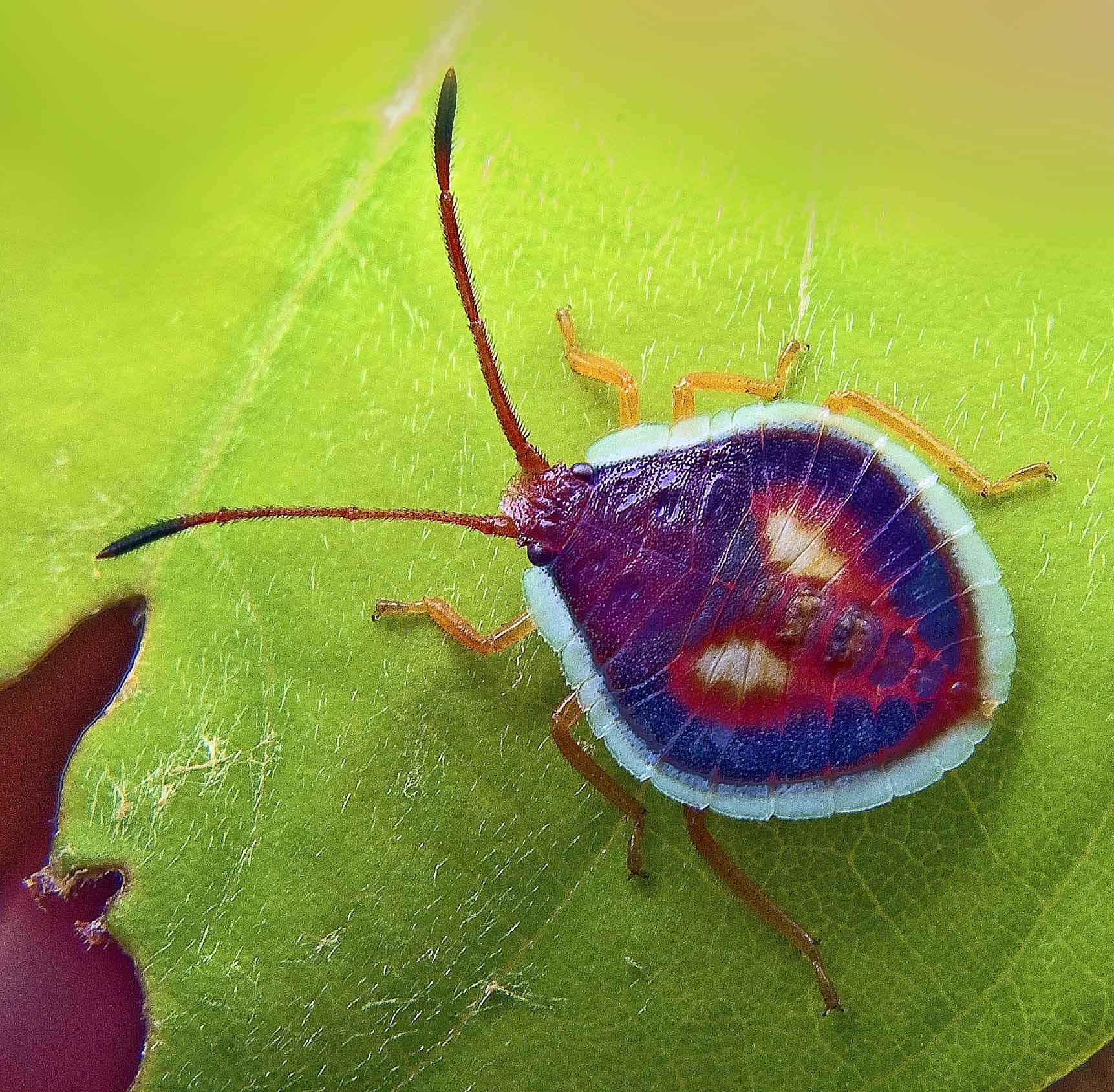 Interesting bug photo