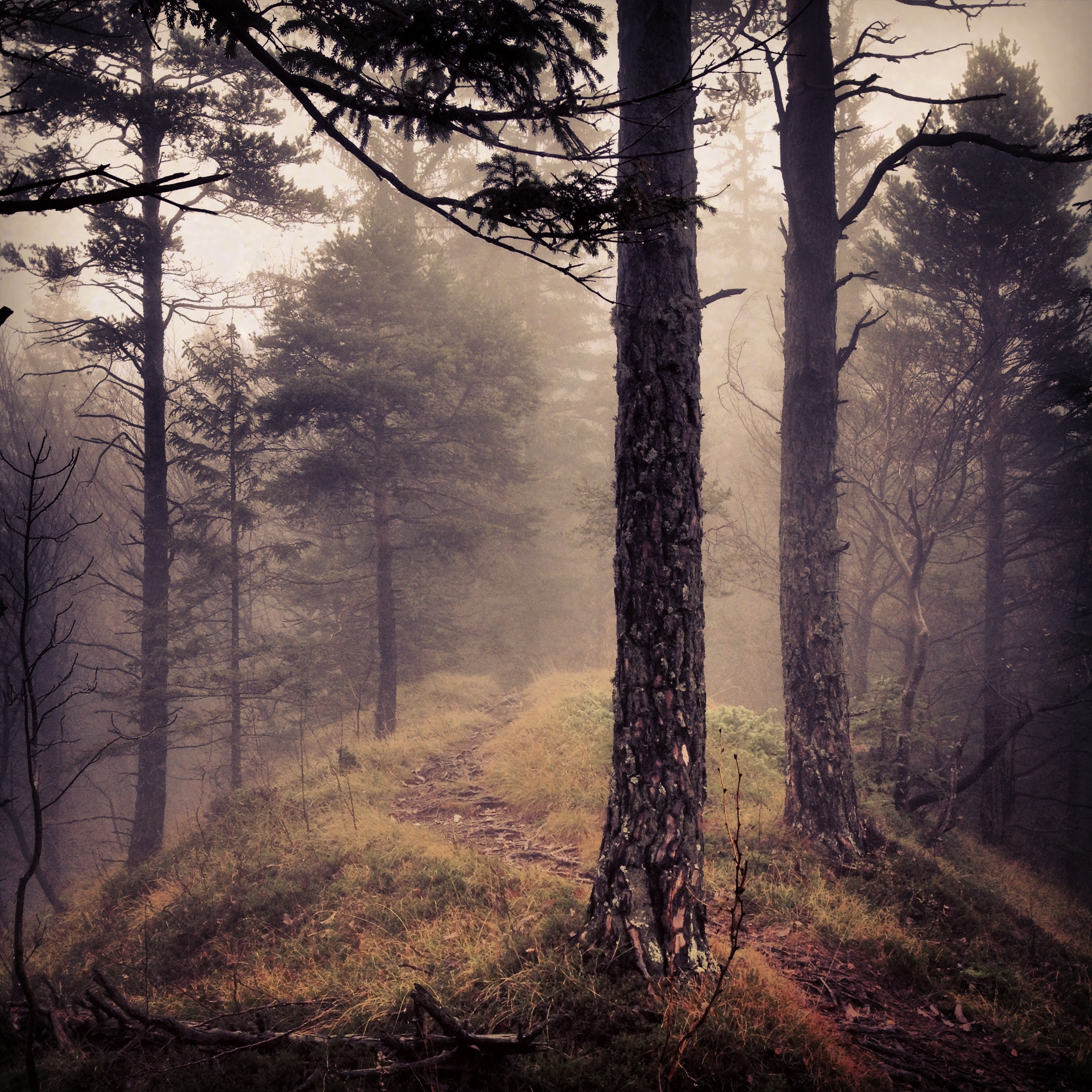 Into the wild, Wood, Woods, Wild, Forest, HQ Photo