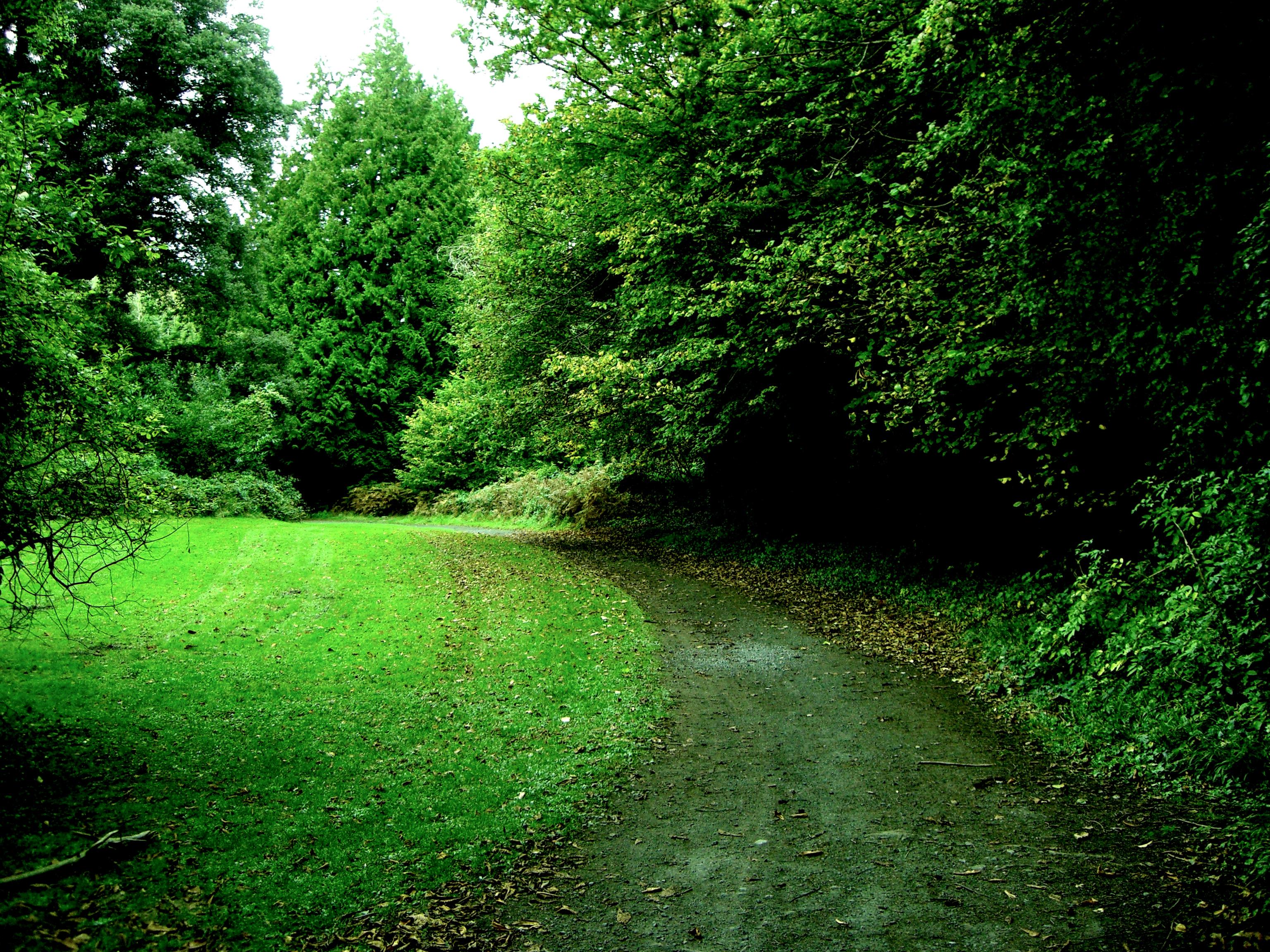 Ireland, Alone, Empty, European, Green, HQ Photo