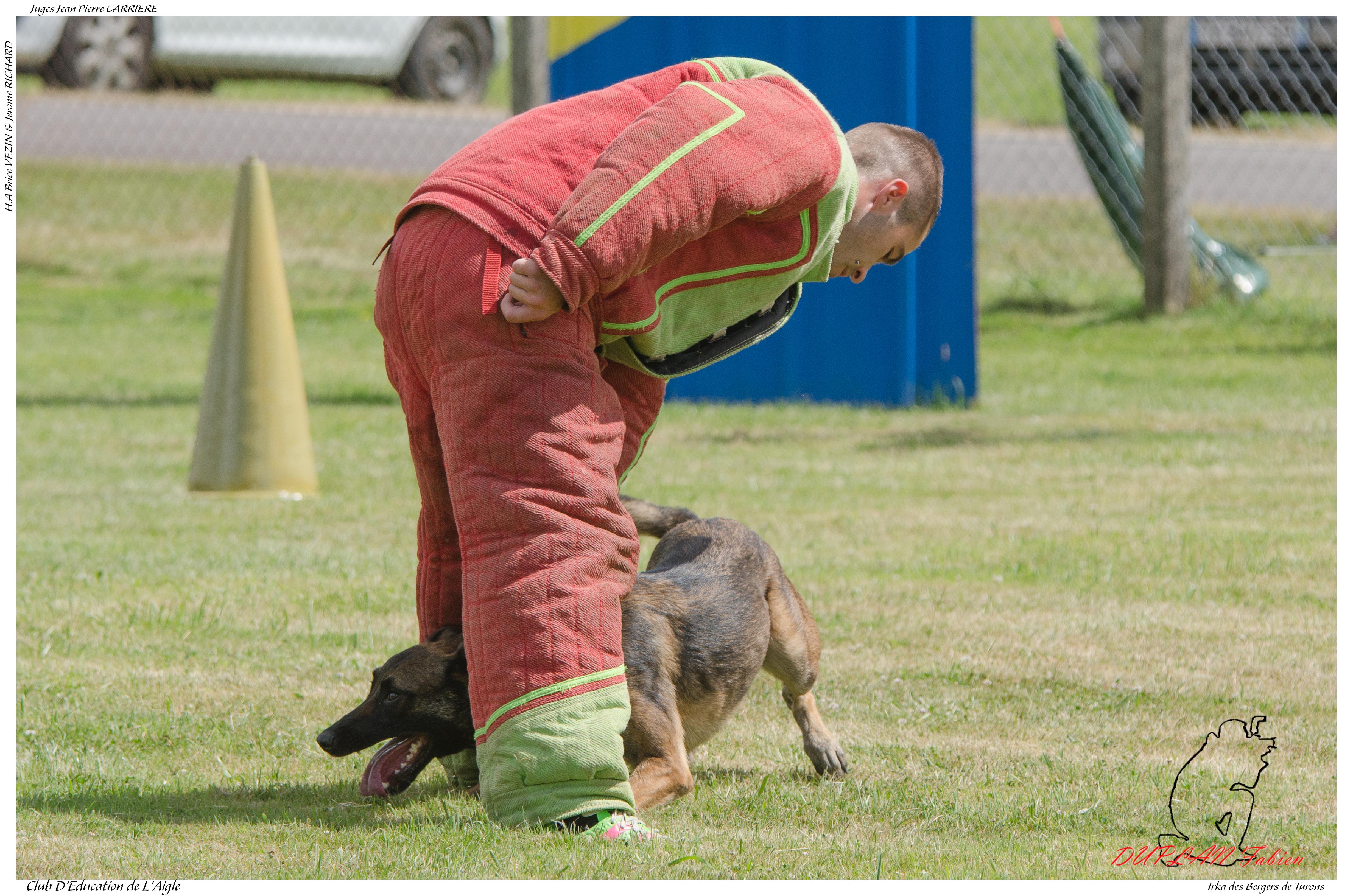 Irka des Bergers de Turons PILON G --3671, Animal, Dog, Outdoor, Pet, HQ Photo
