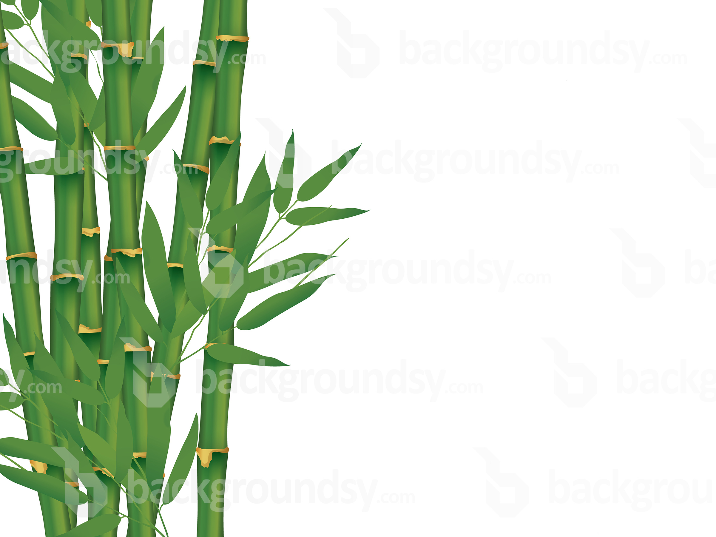 Isolated bamboo background photo