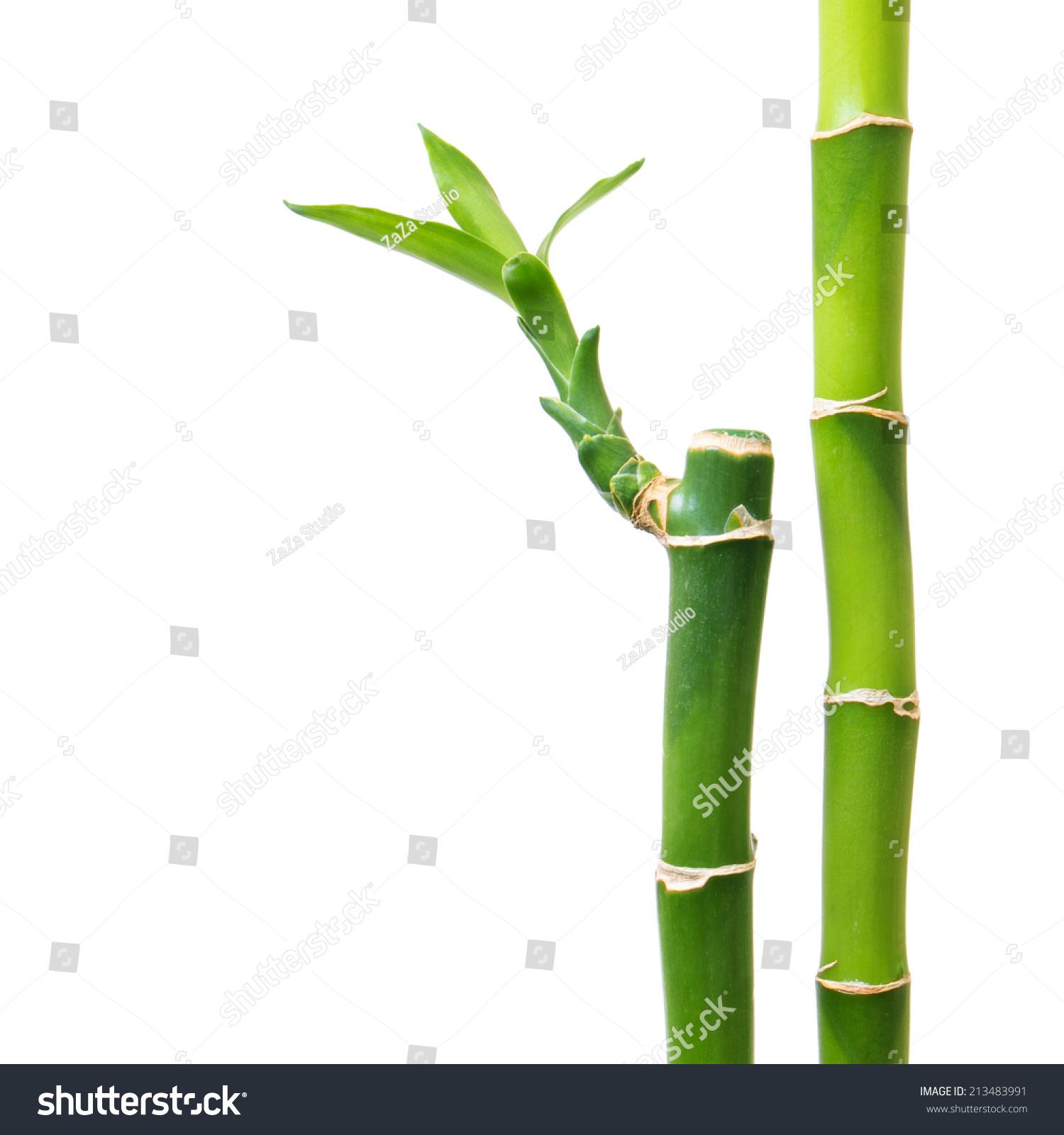 Fresh Bamboo Isolated On White Background Stock Photo 213483991 ...