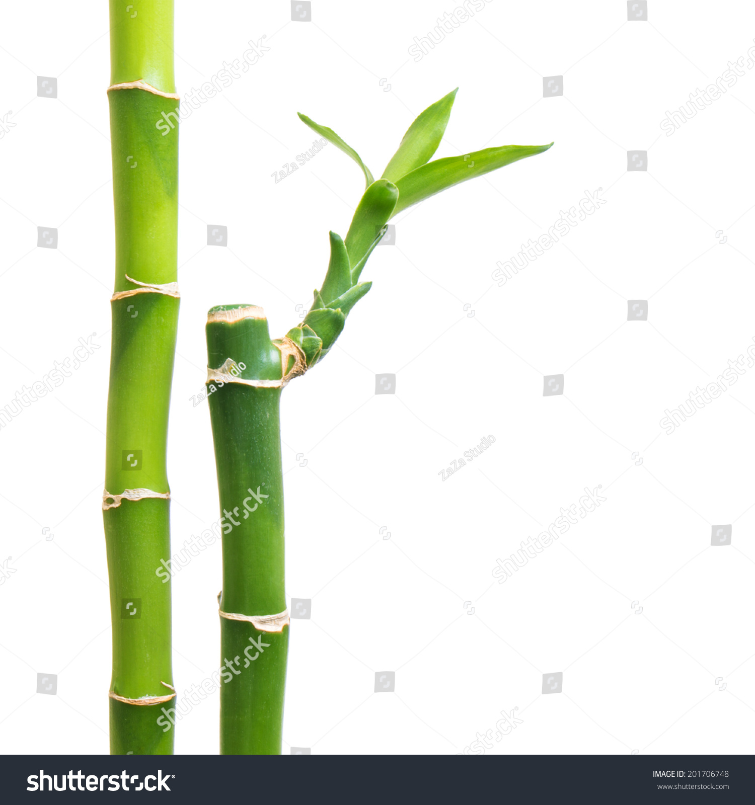 Fresh Bamboo Isolated On White Background Stock Photo (Royalty Free ...