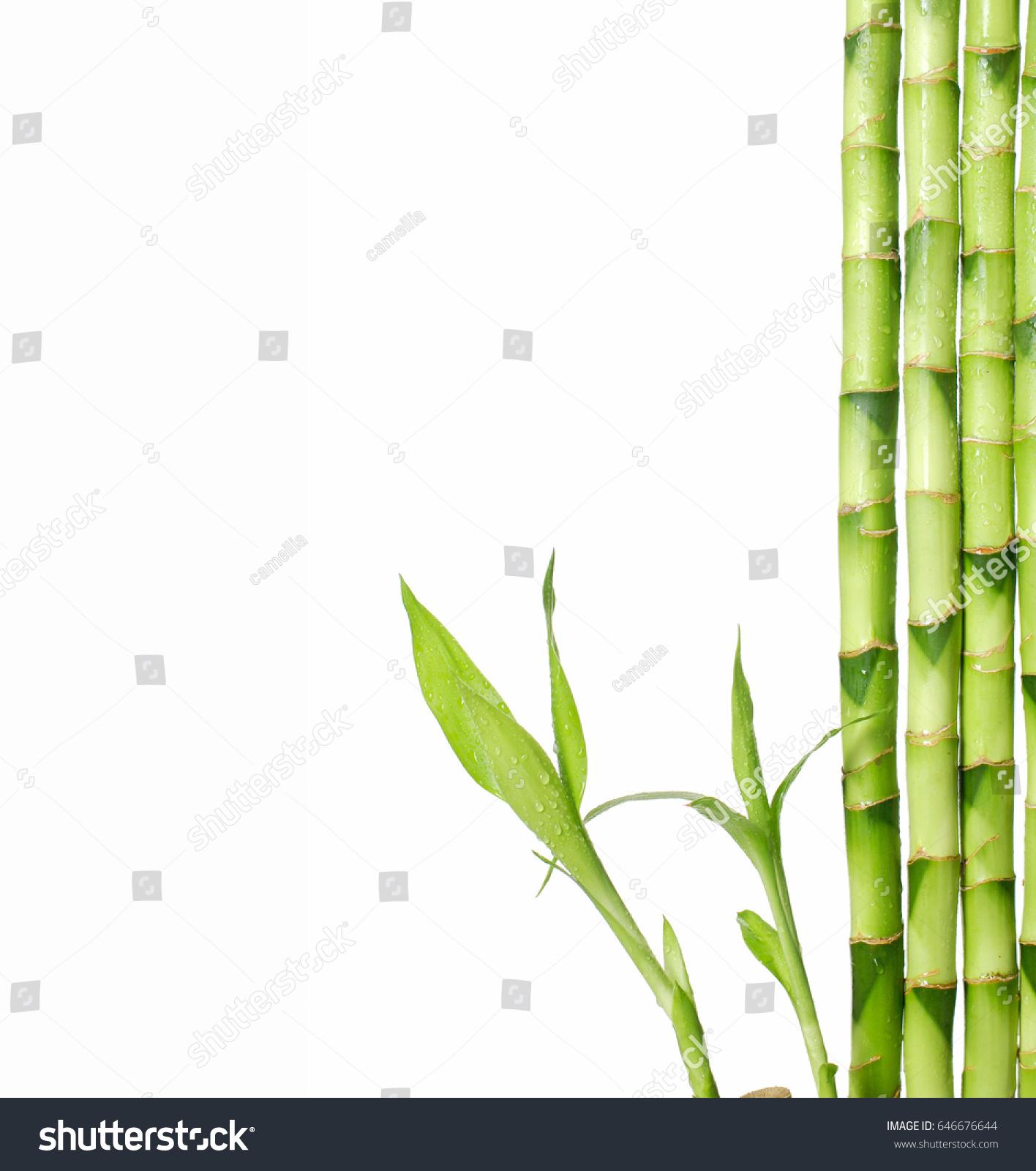 Bamboo Isolated On White Background Stock Photo (Royalty Free ...