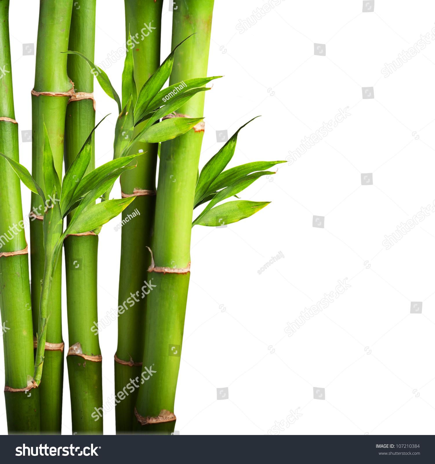Fresh Bamboo Isolated On White Background Stock Photo (Royalty Free ...