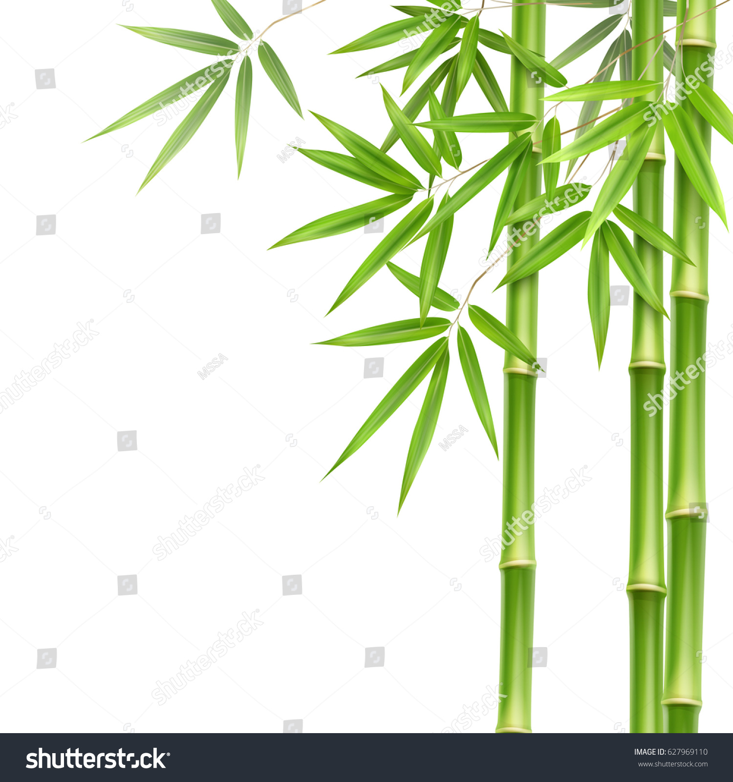 Vector Green Bamboo Stems Leaves Isolated Stock Vector 627969110 ...