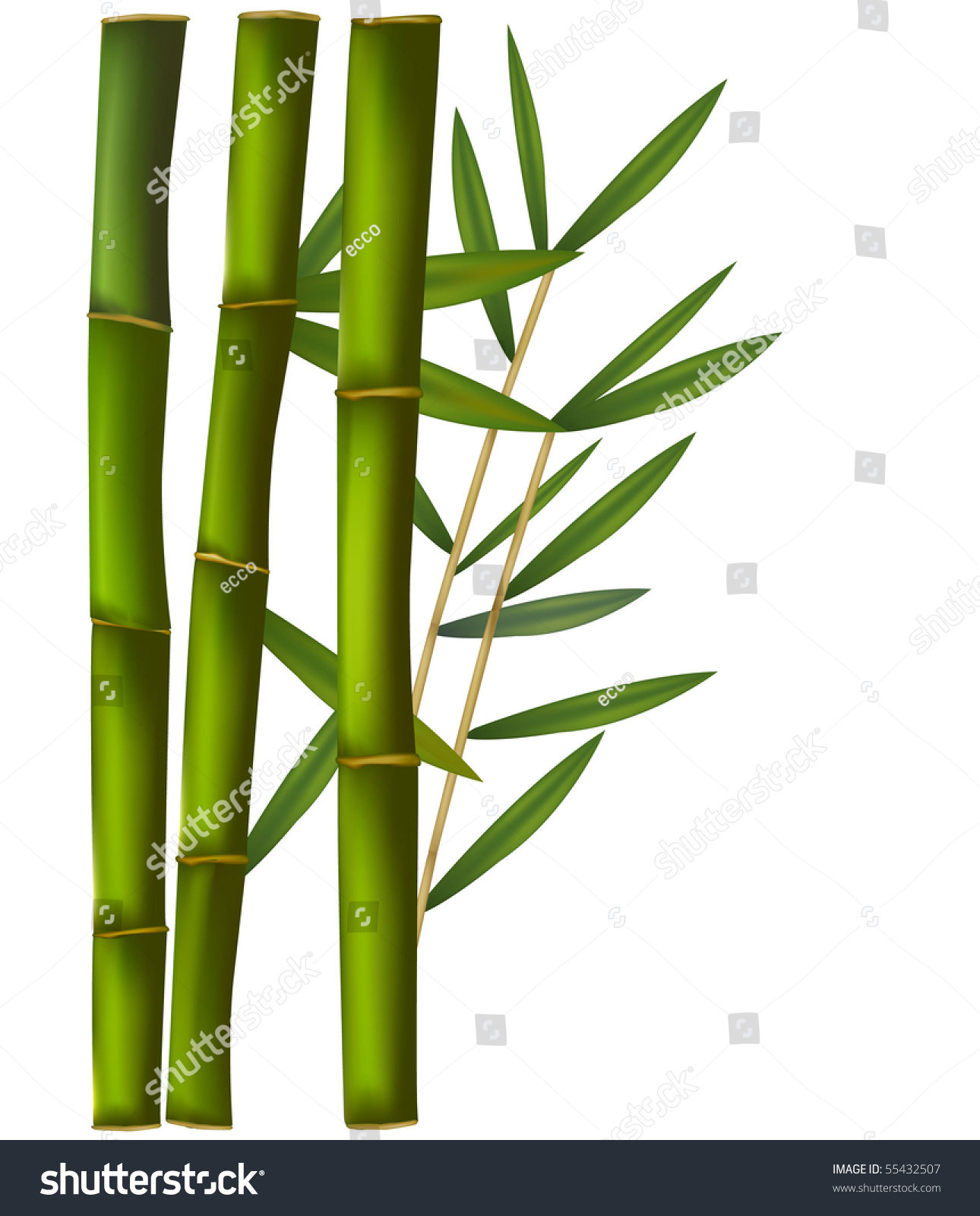 Bamboo Isolated On White Background Stock Vector (2018) 55432507 ...