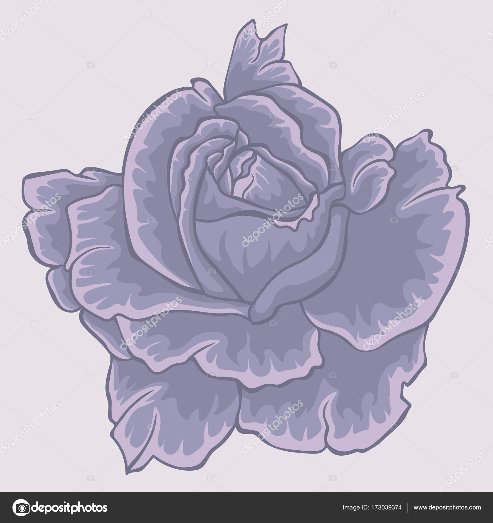 Violet rose. Isolated flower. Isolated violet rose — Stock Vector ...