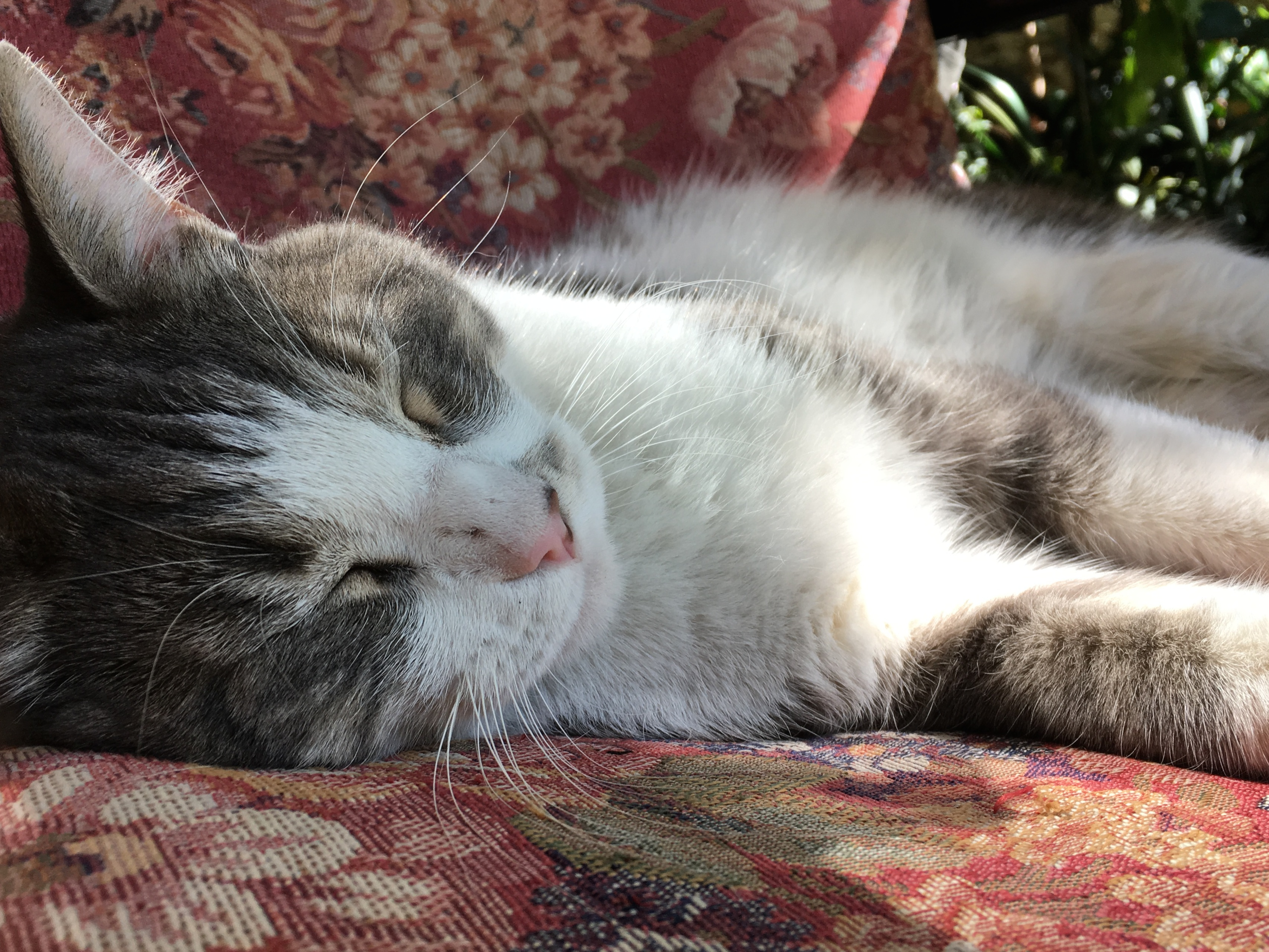 It's a hard life, bubba photo