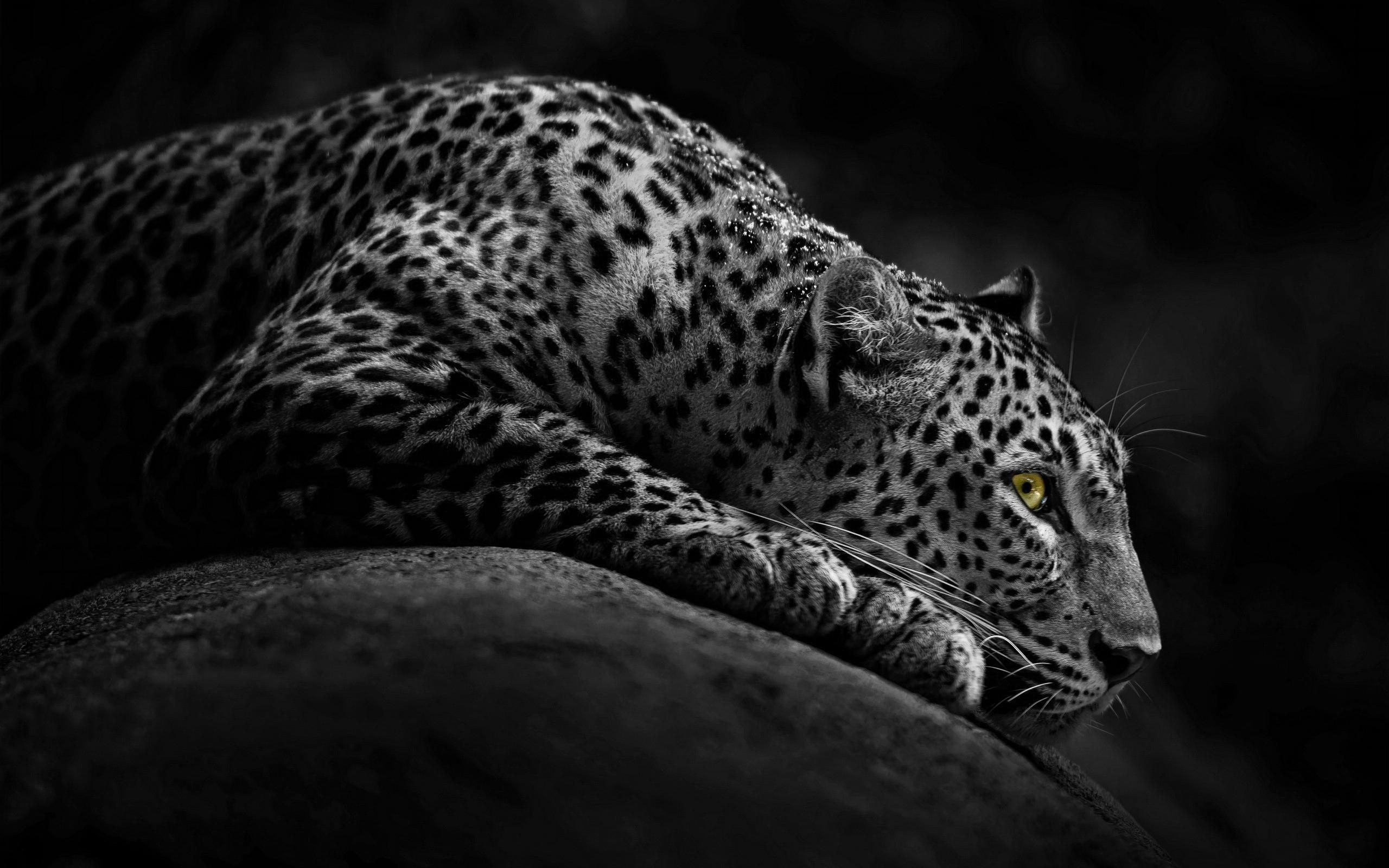 Jaguar's Eye by MeGustaDeviantart on DeviantArt