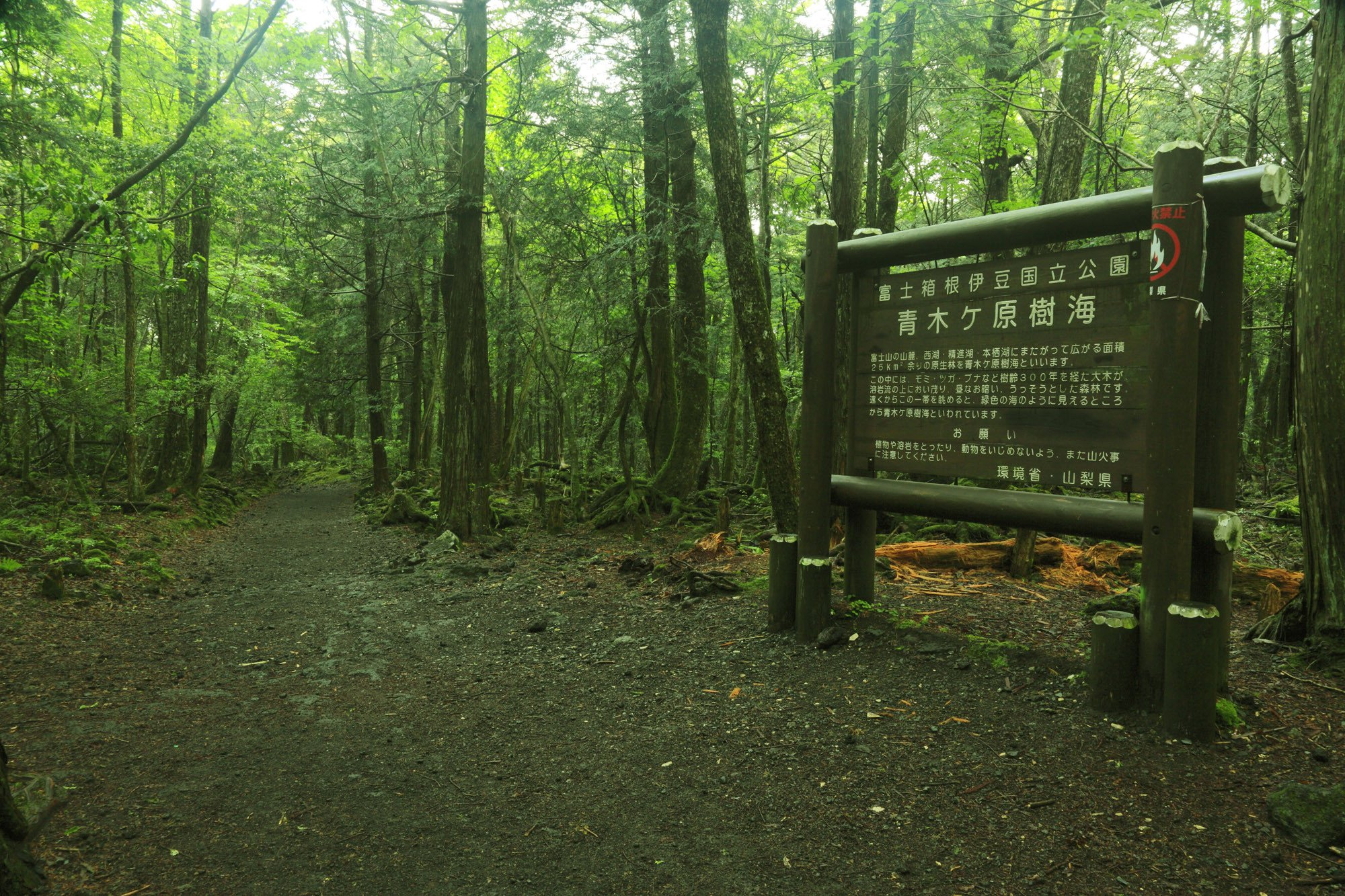 Exploring The True Story Behind Japan's Eerie Suicide Forest ...