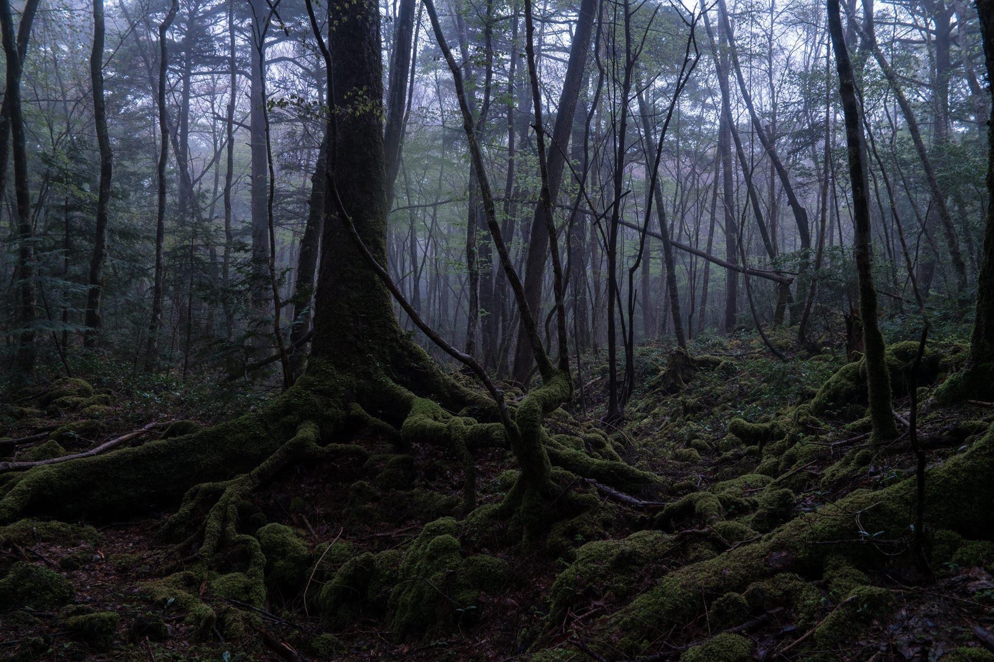 EXPLORING Suicide Forest Aokigahara, Japan ( 青木ヶ原 ) - YouTube