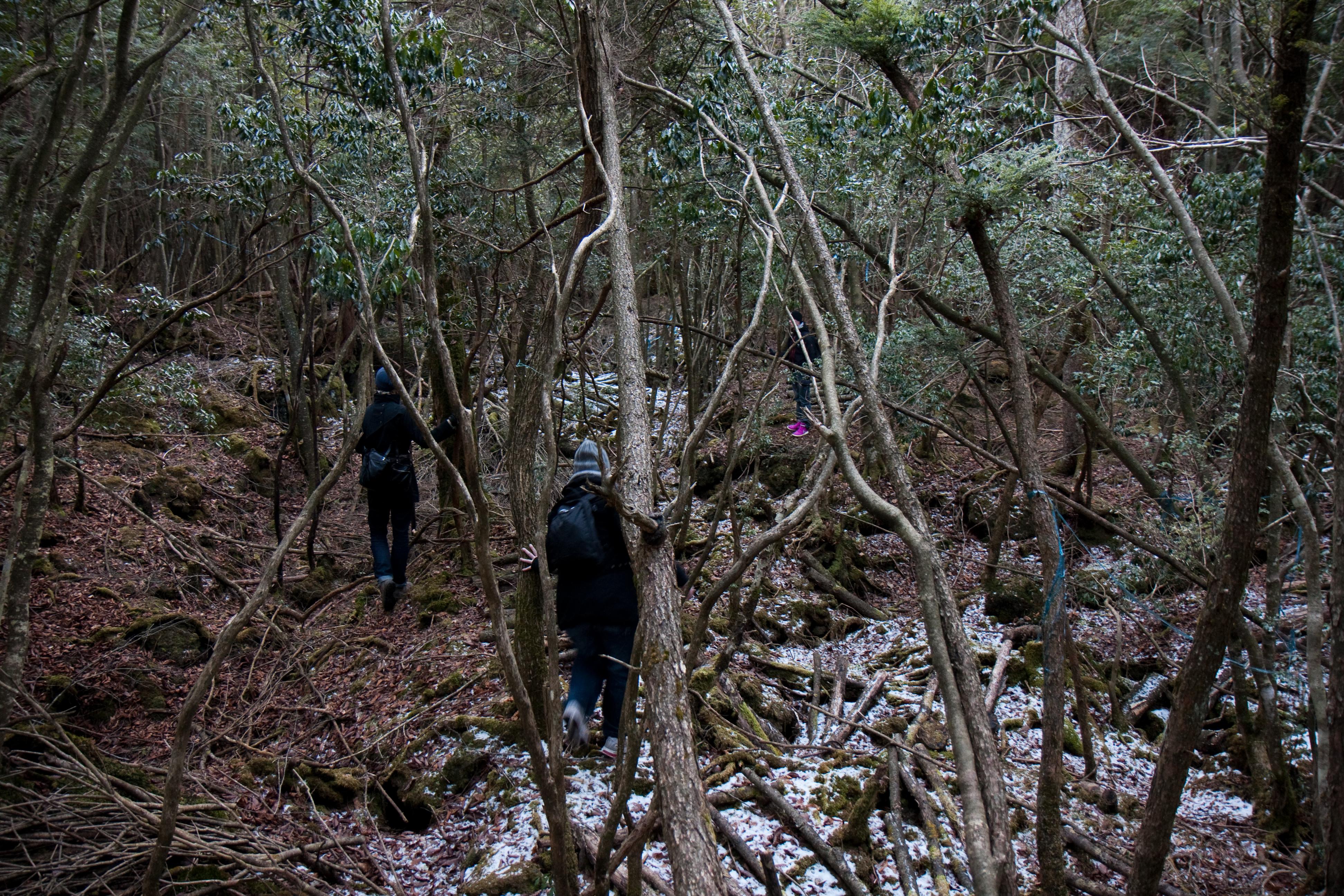 Aokigahara Suicide Forest - Weird Japan Weird Japan