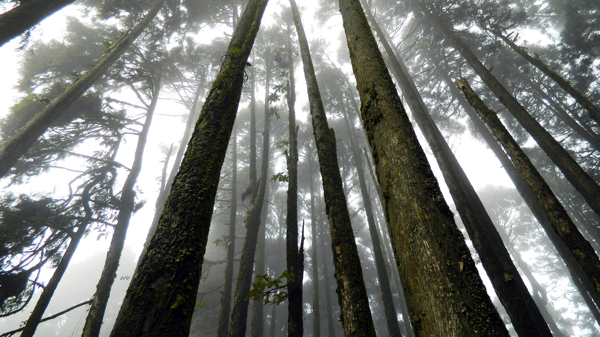 Japan Suicide Forest, Branches, Morning, Trees, Tree trunks, HQ Photo