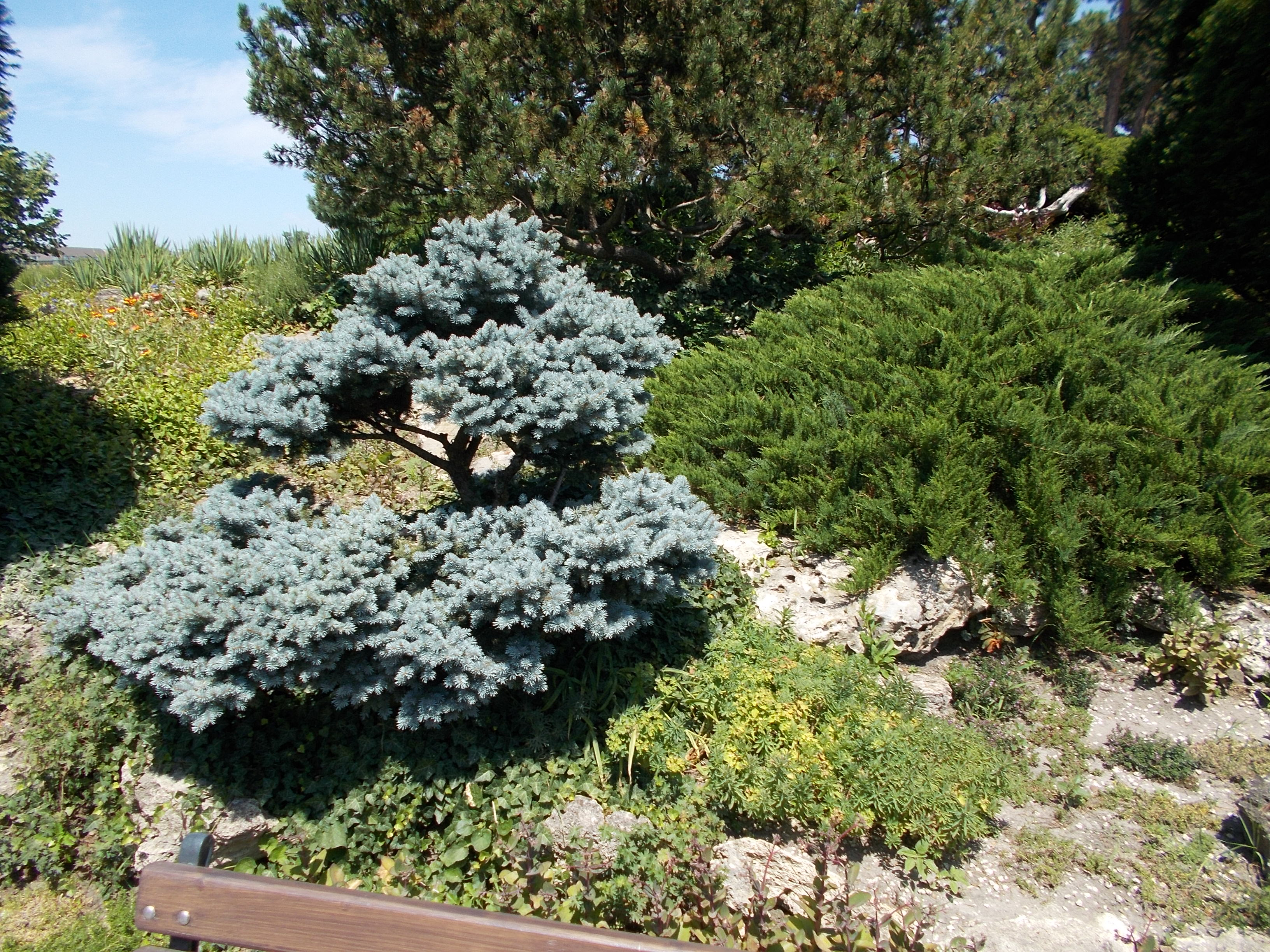 File:Japanese Garden. Bush. - Margaret Island, Budapest, Hungary.JPG ...