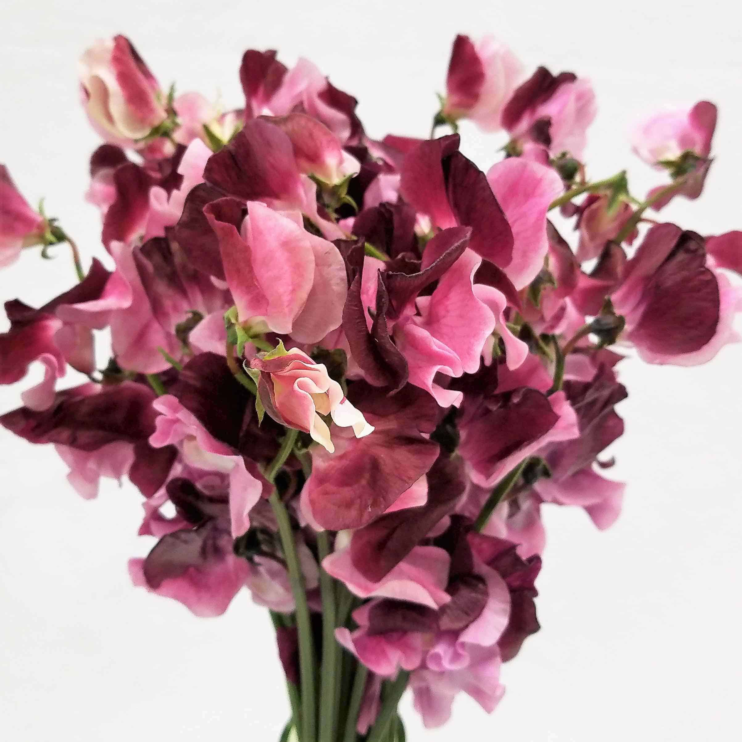 Mayesh Wholesale Florist | japanese flowers