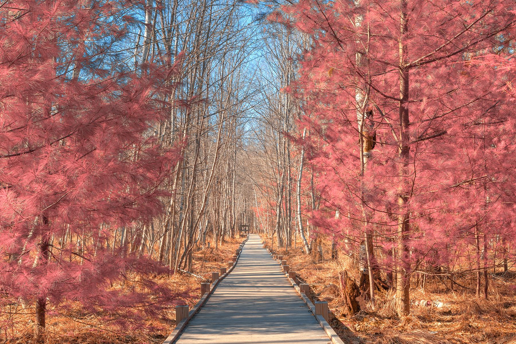 Jesup boardwalk trail - tickle me pink hdr photo