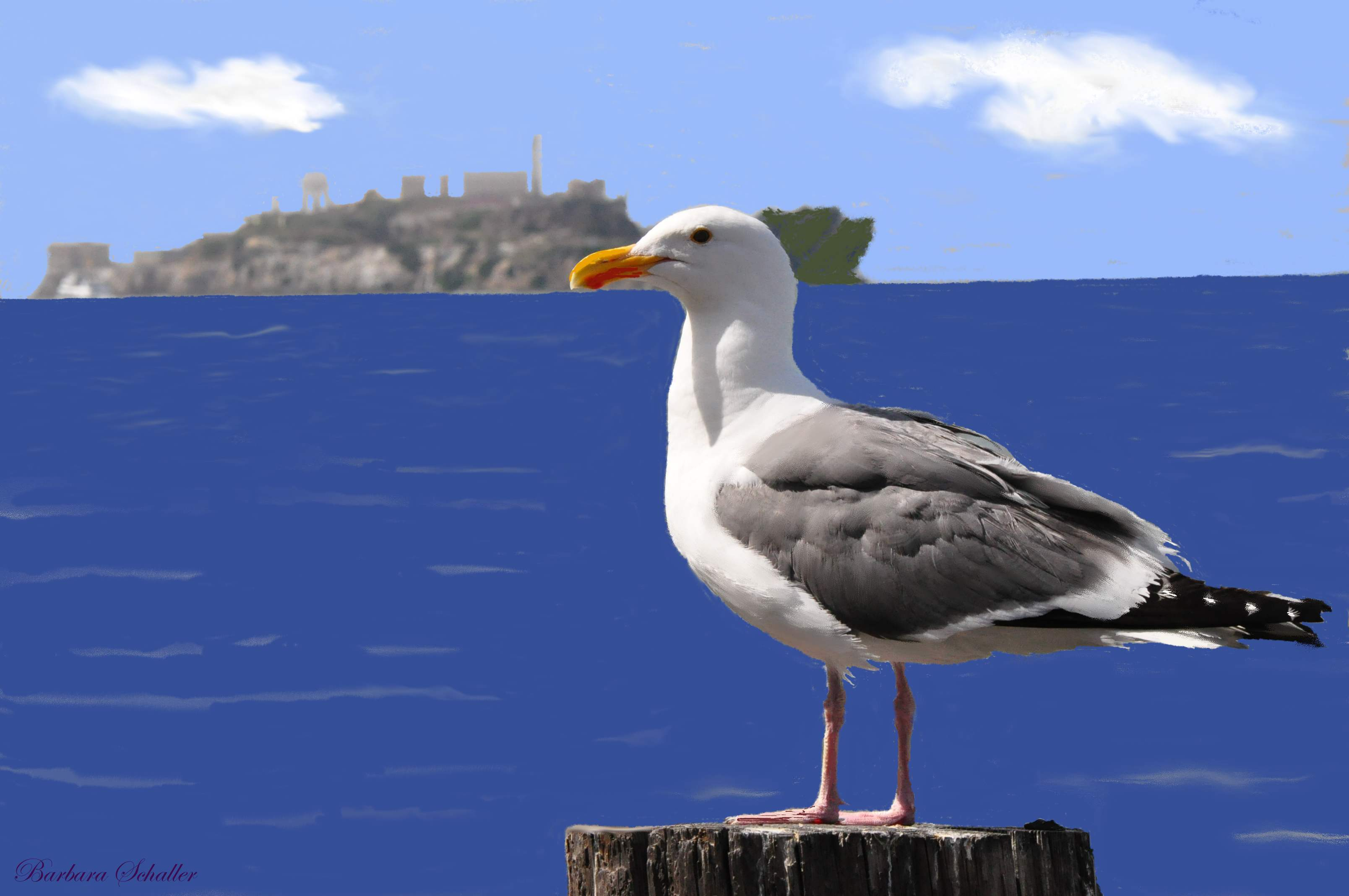 The meaning and symbolism of the word - «Sea gull»