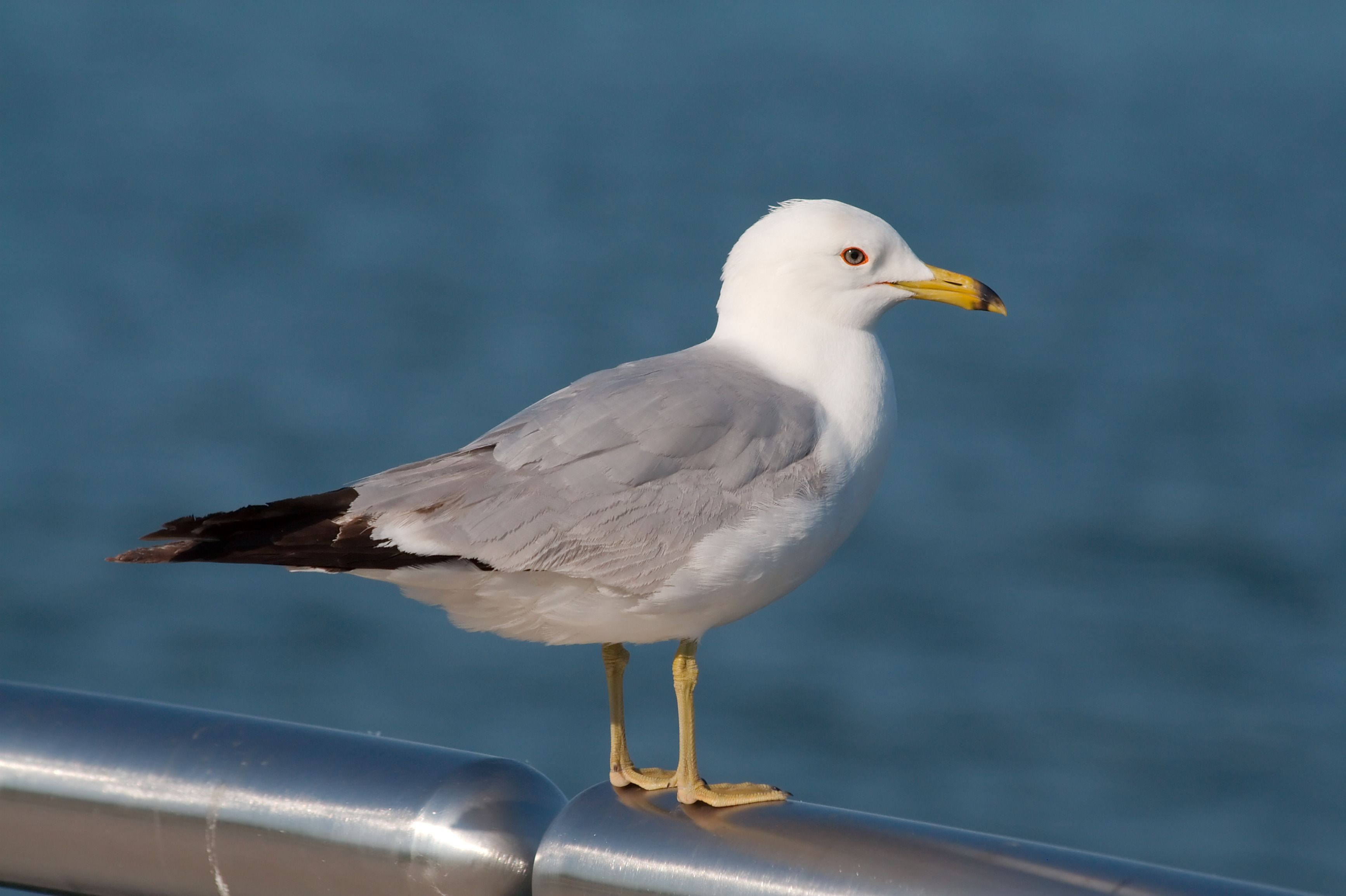 Nova Scotia Power says a seagull was the cause of a power outage in ...