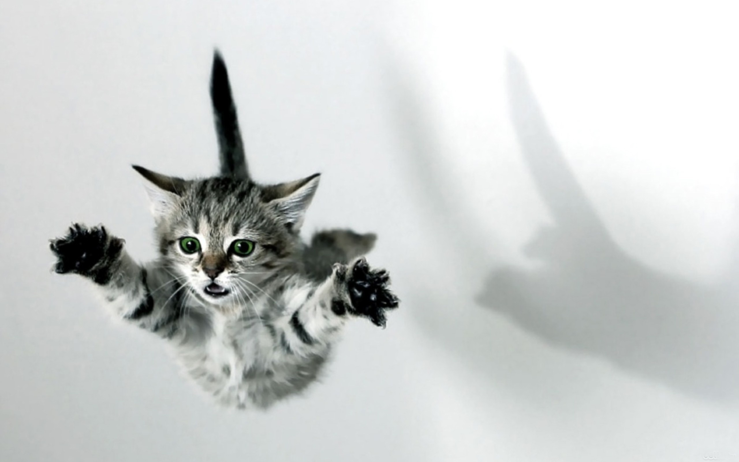 Cats: Cats Kittens Animals Jumping Free Cat Background for HD 16:9 ...