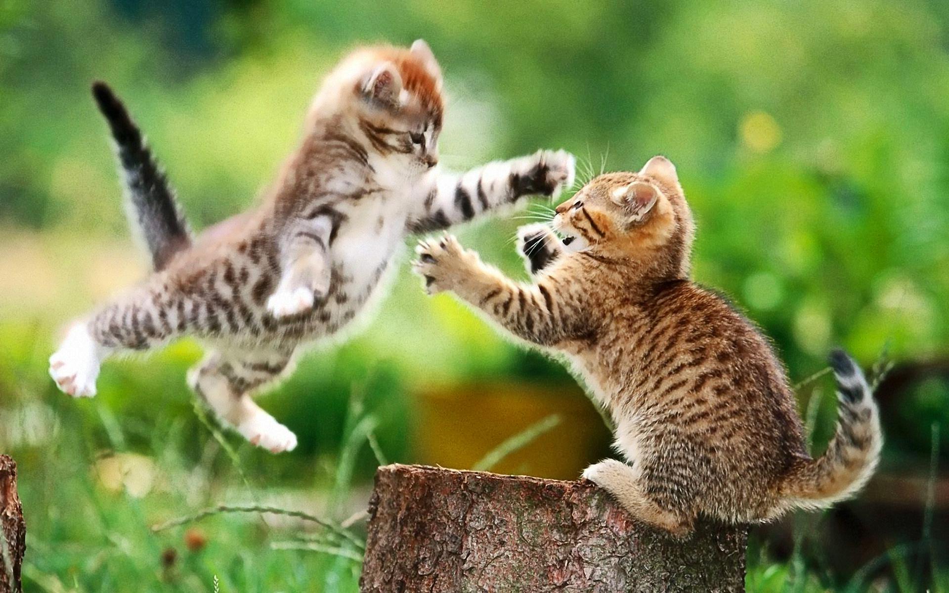 Jumping Kitten (id: 181692) – BUZZERG