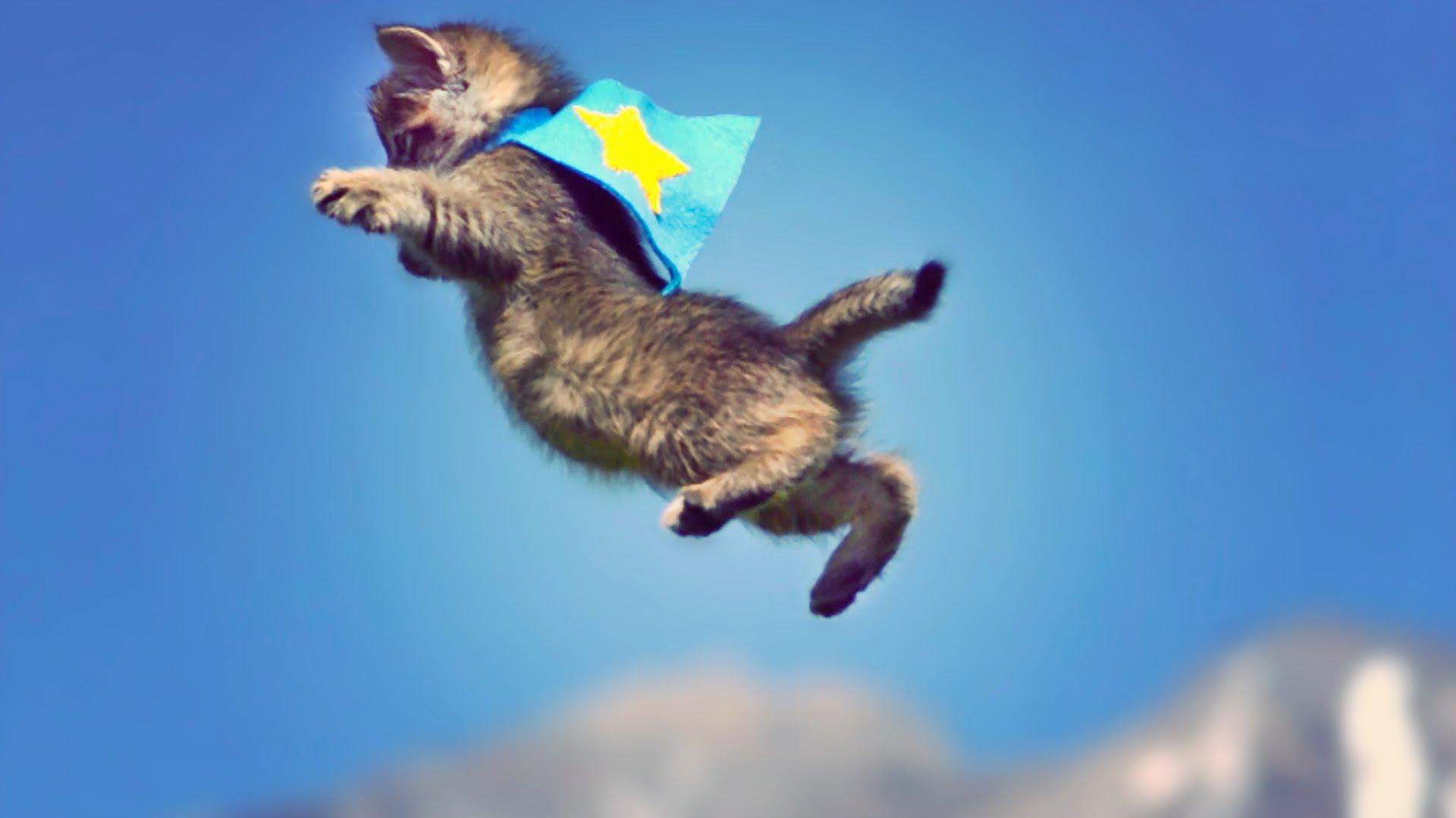 CUTE KITTENS FLY IN SLOW MOTION! // ScottDW - YouTube