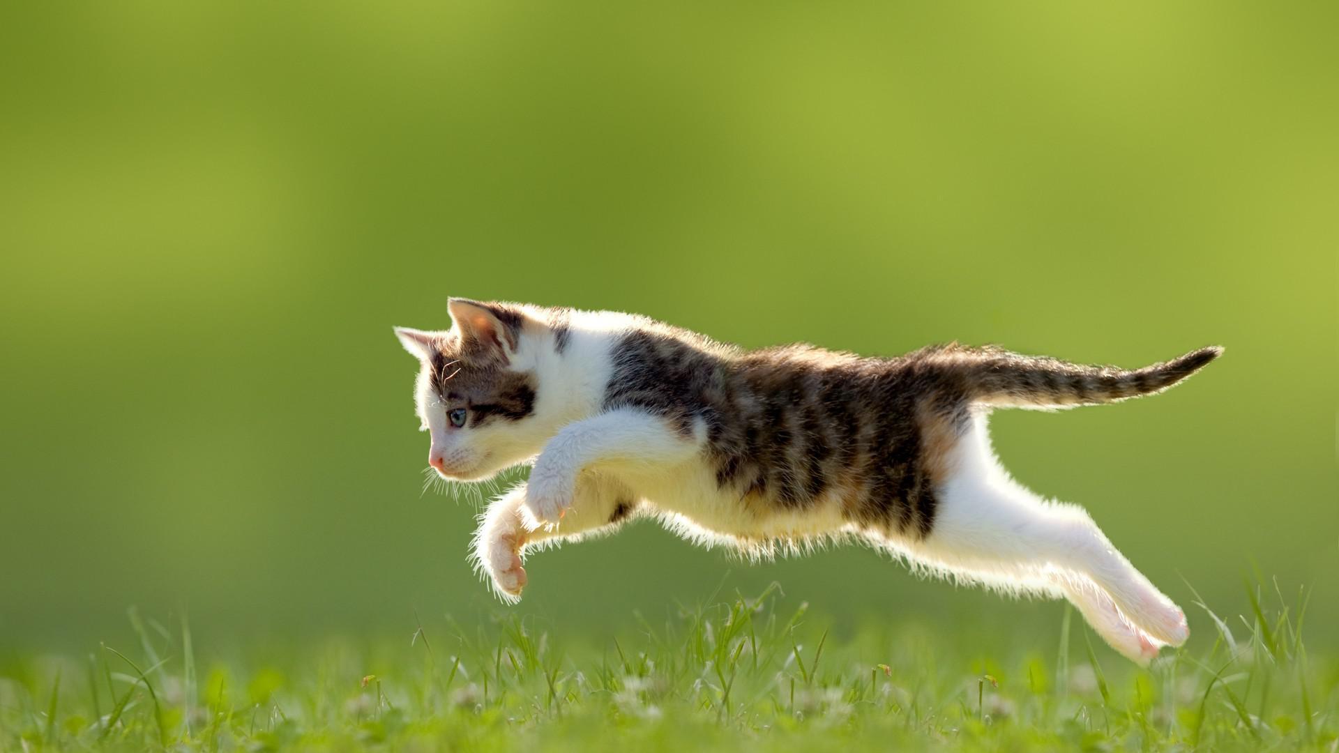 Kitten, grass, jumping, cute animal wallpaper | other | Wallpaper Better