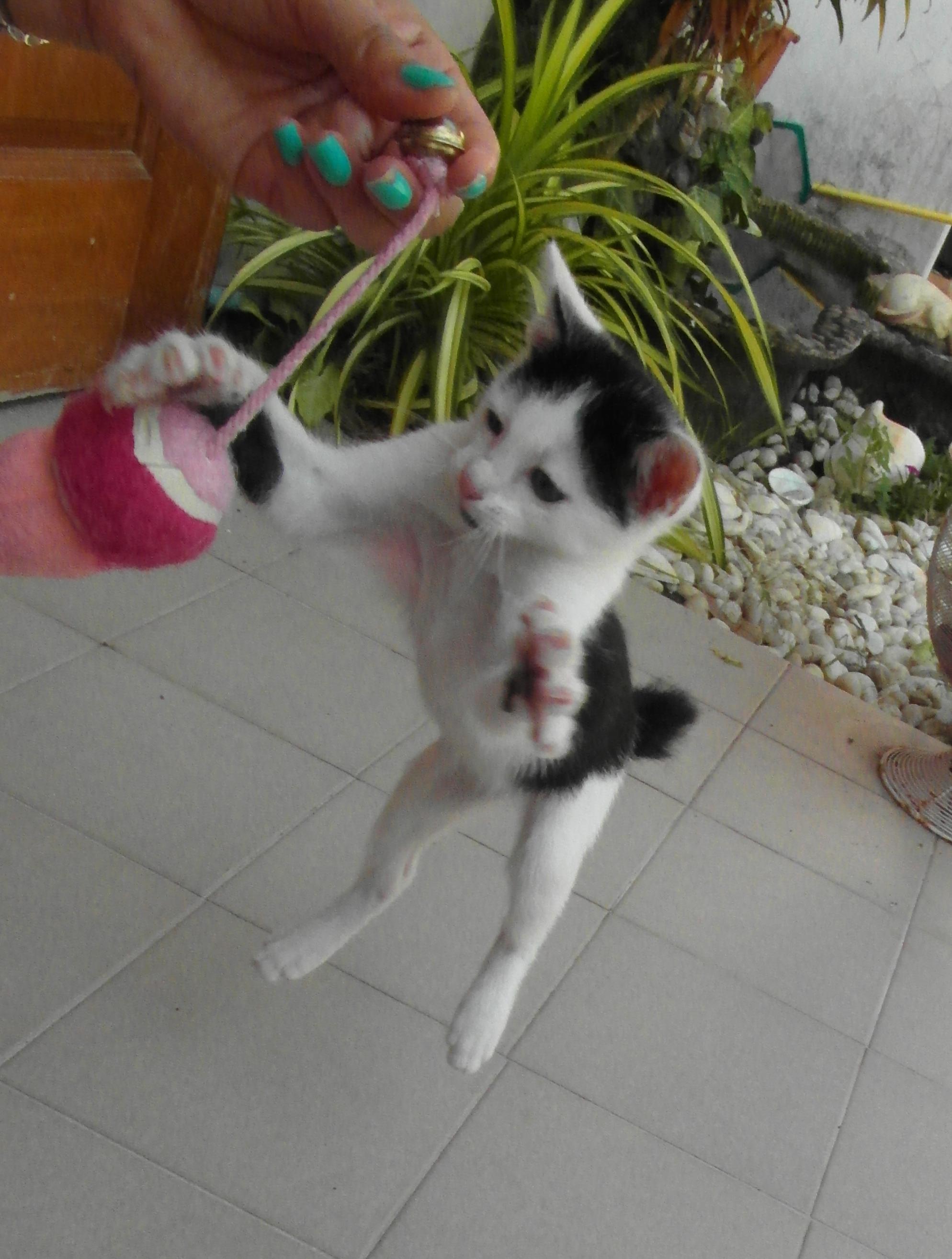Jumping Kitten, Action, Cat, Jump, Jumping, HQ Photo