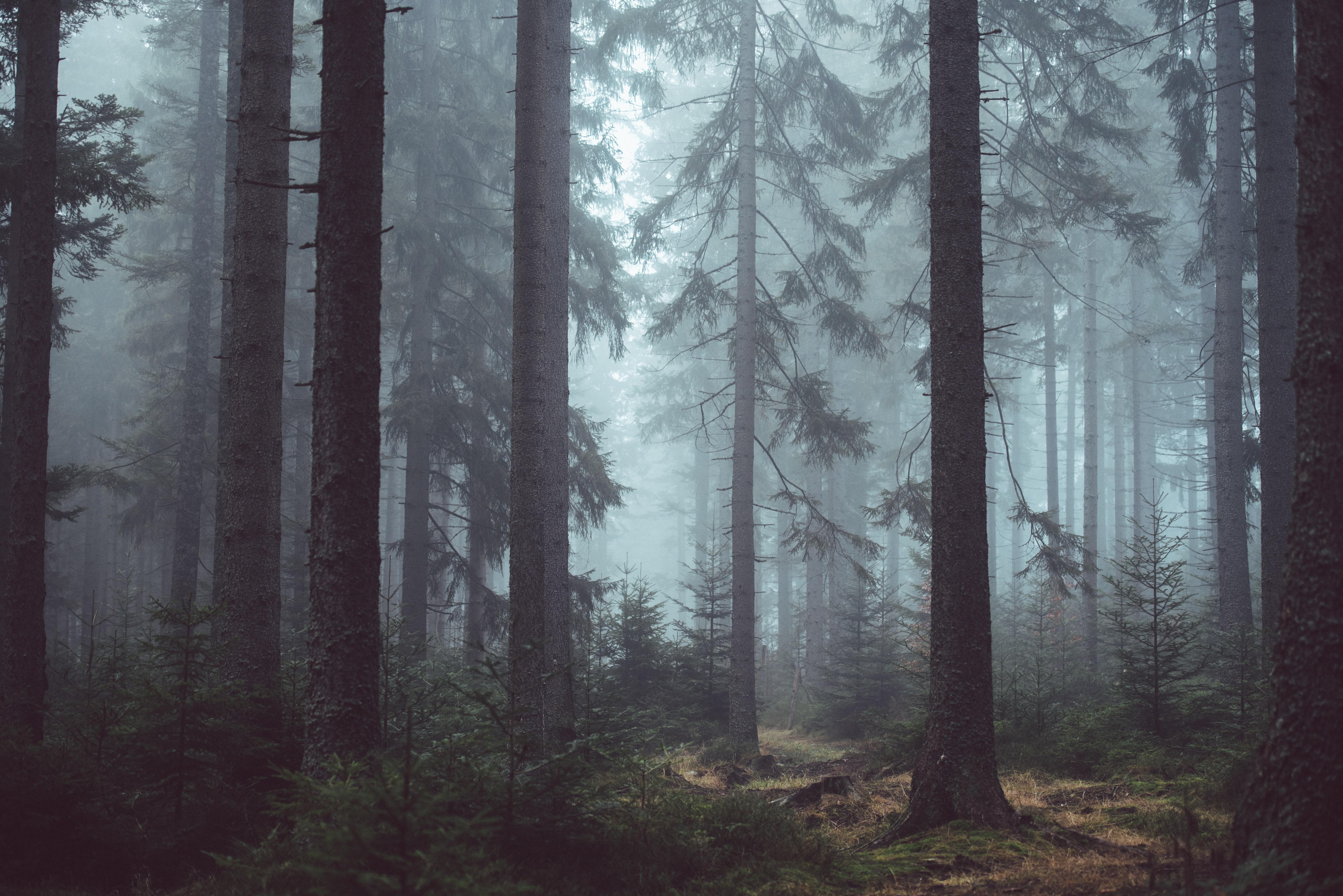 Jungle, Tree, Wood, Plants, Forest, HQ Photo