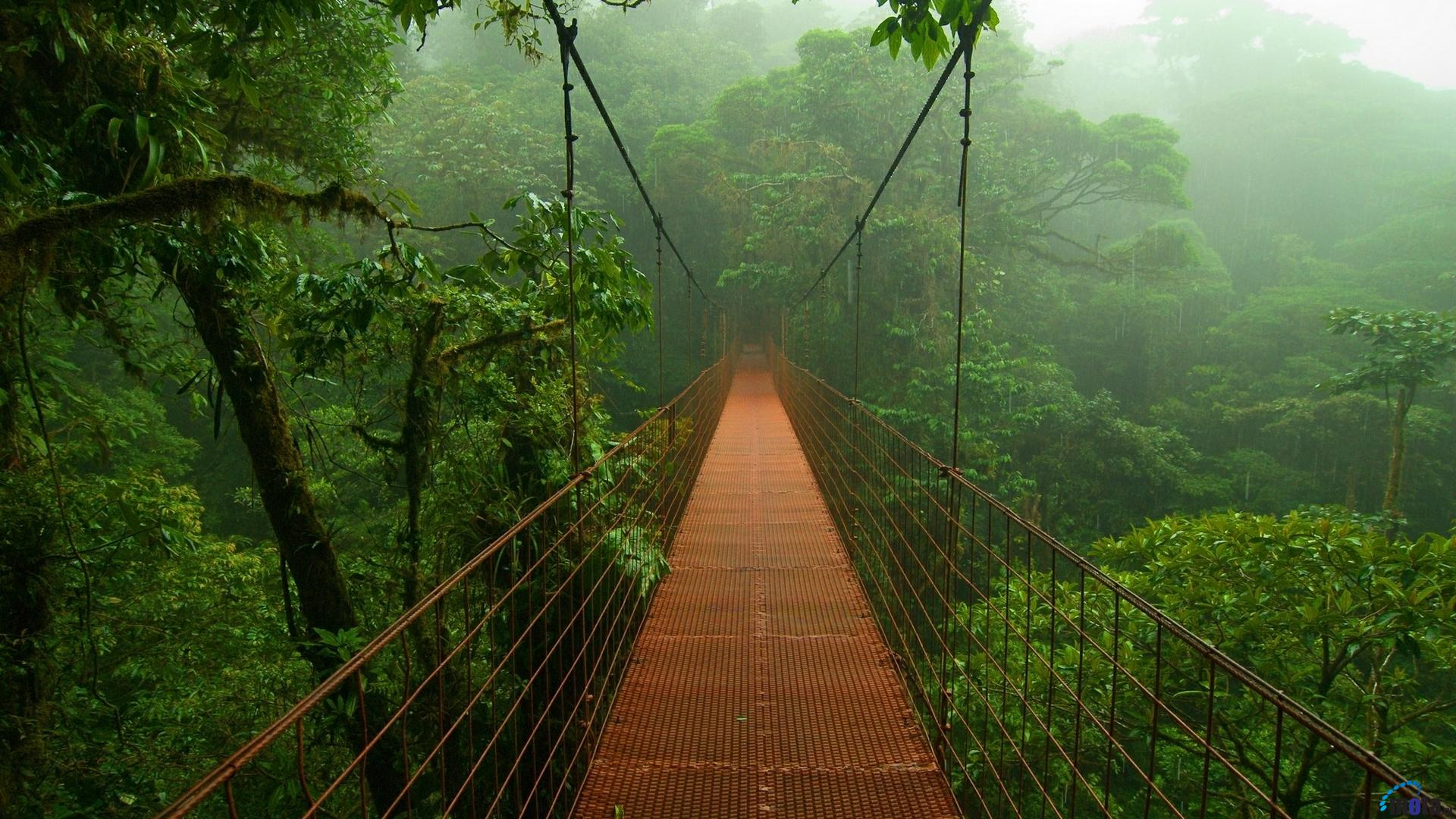 Amazon Jungle Wallpapers | Top HDQ Amazon Jungle Images, Wallpapers ...