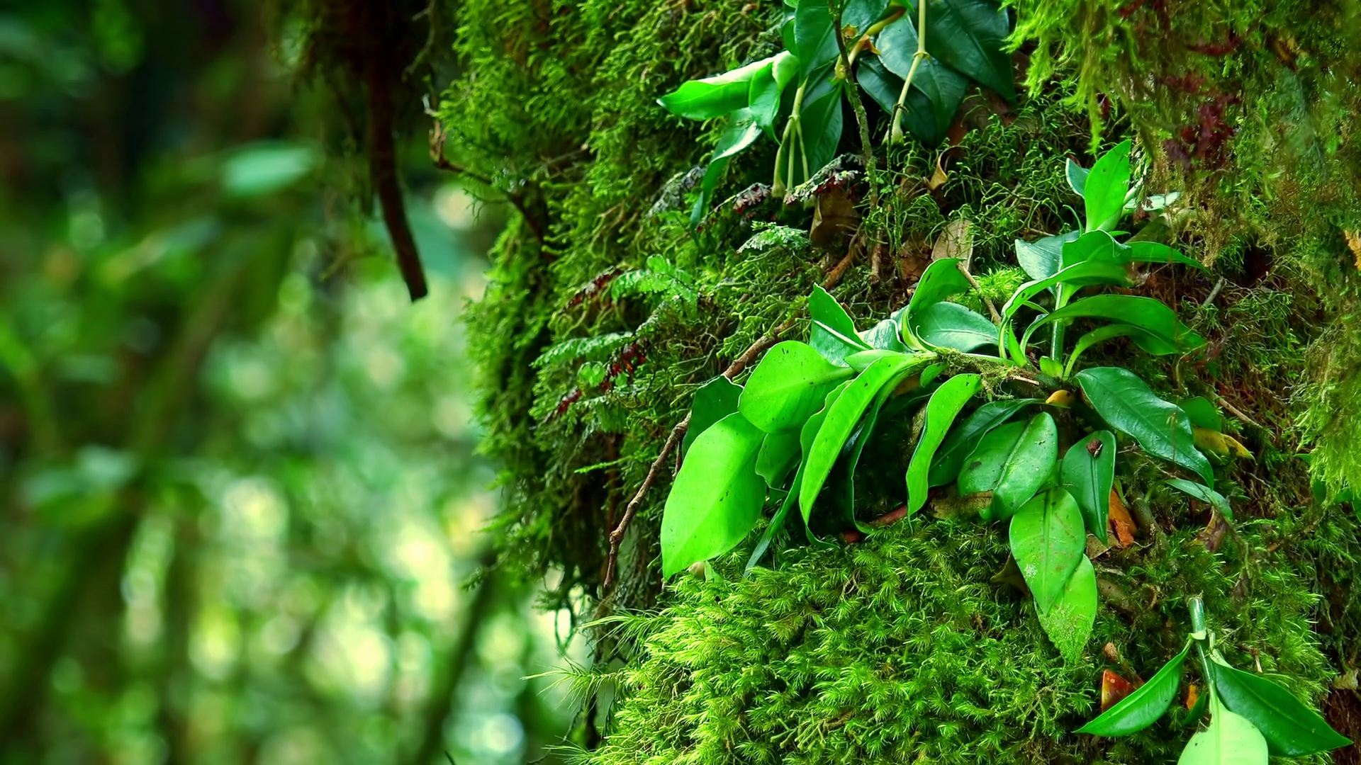 Close-up of green fuzzy moss and leaves growing on trunk of exotic ...