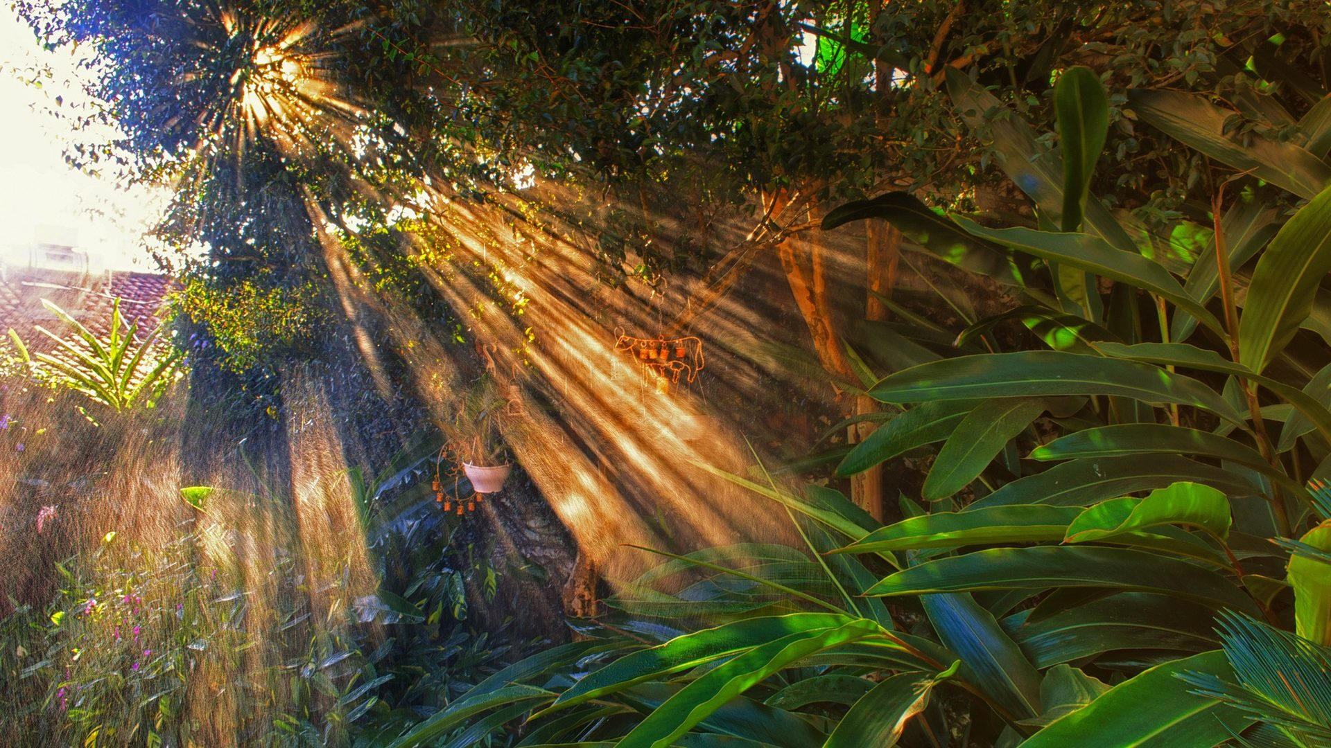 Trees: Bokeh Jungle Forest Trees Sunlight Nature Wallpaper Download ...