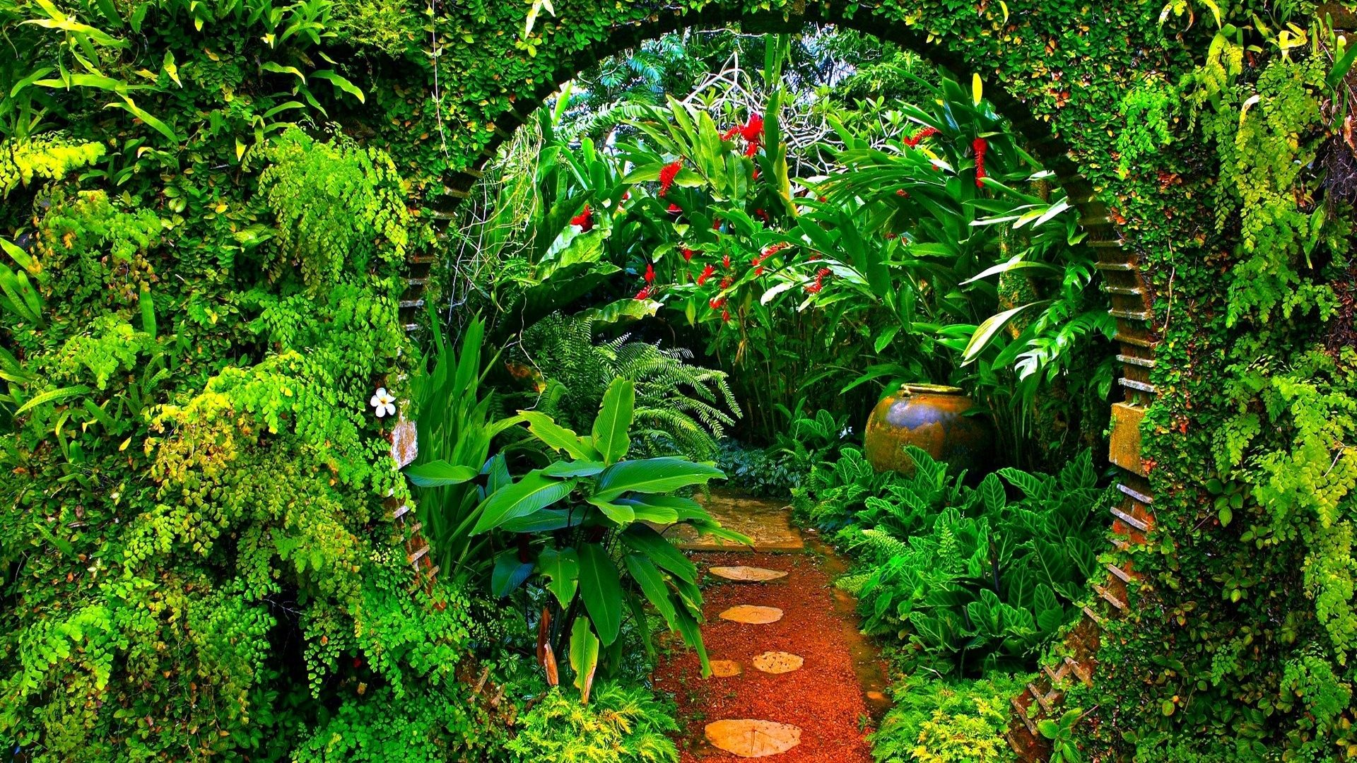 Forest: Jungle Bow Botanical Garden Plants Path Green Amazon Forest ...