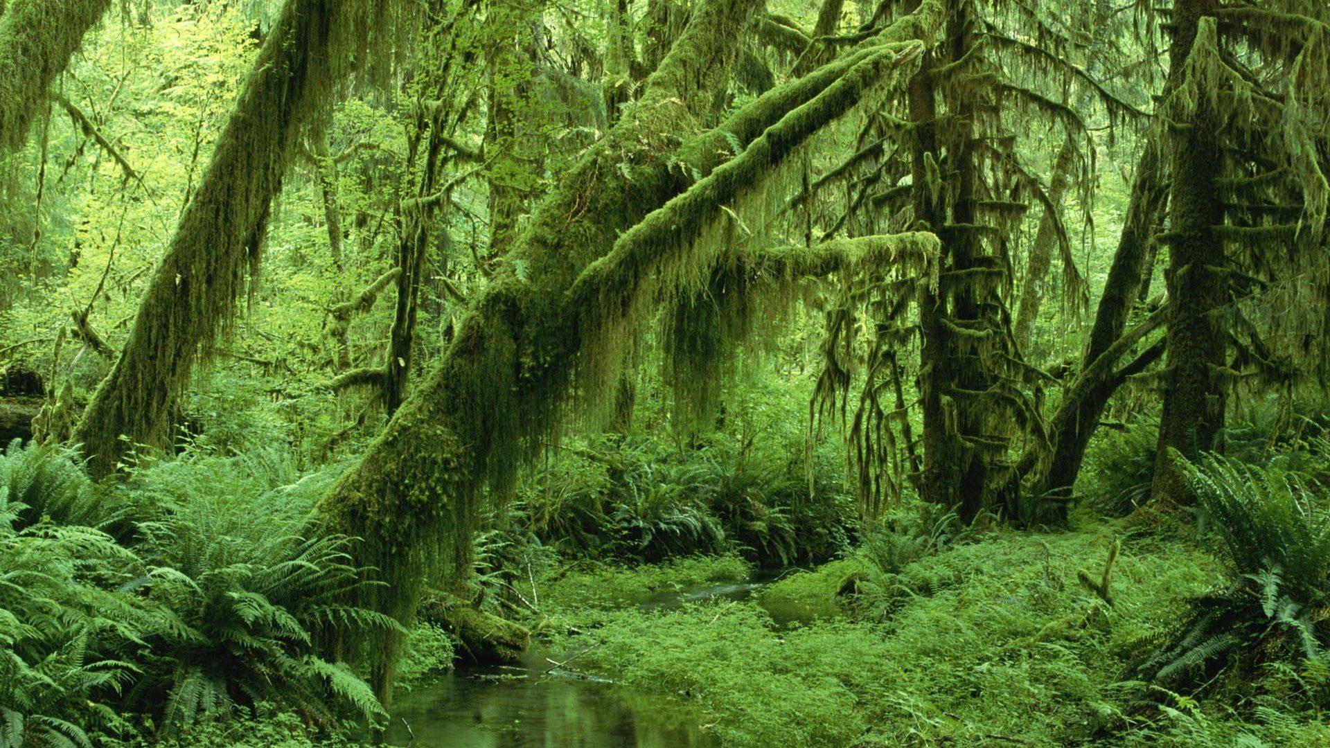 Trees: Season Trees Vines Nature Forest Green Monochrome Leaves ...