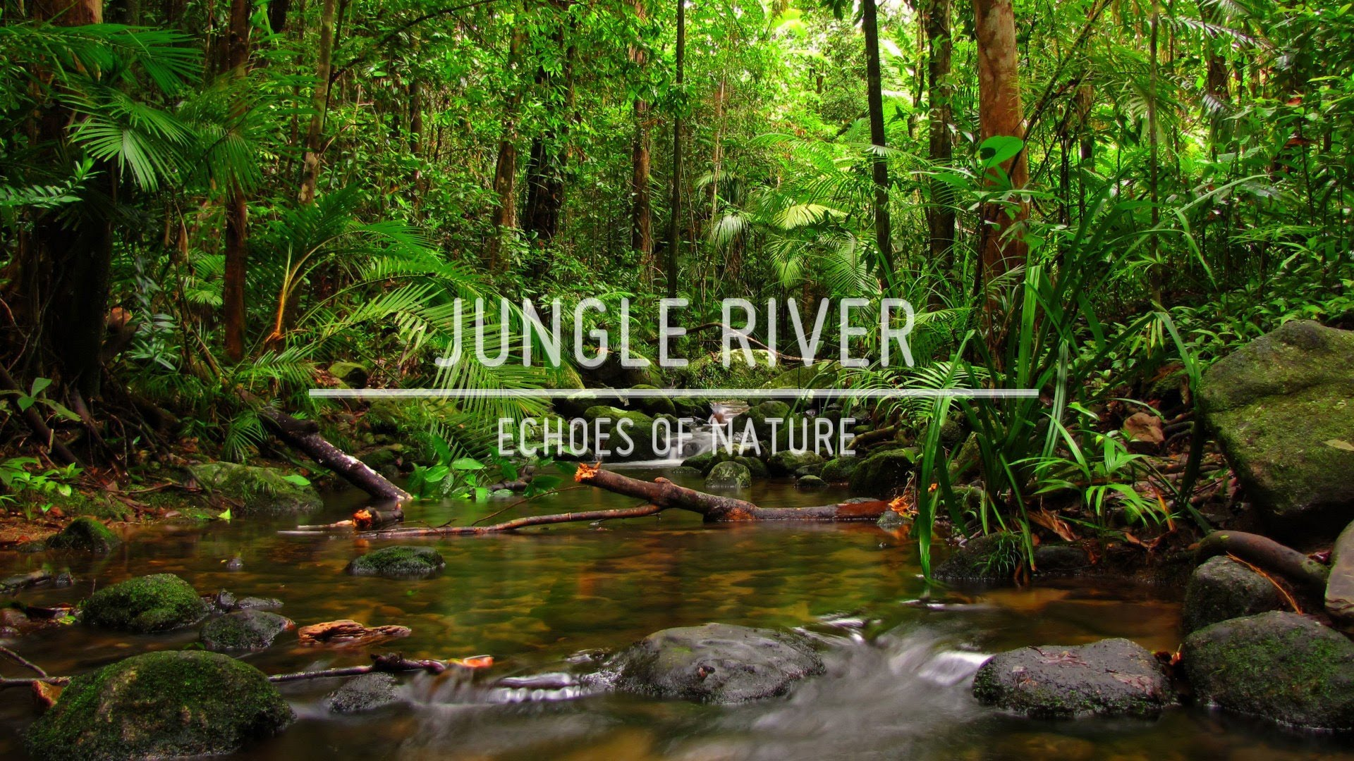 Echoes of Nature - Jungle River - YouTube