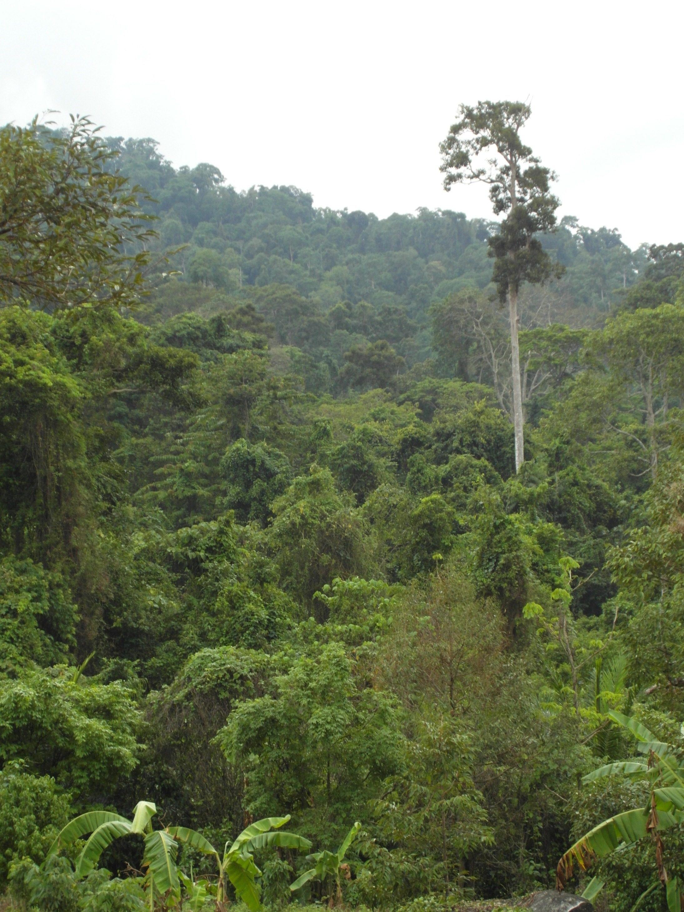 Jungle / tropical rainforest photo
