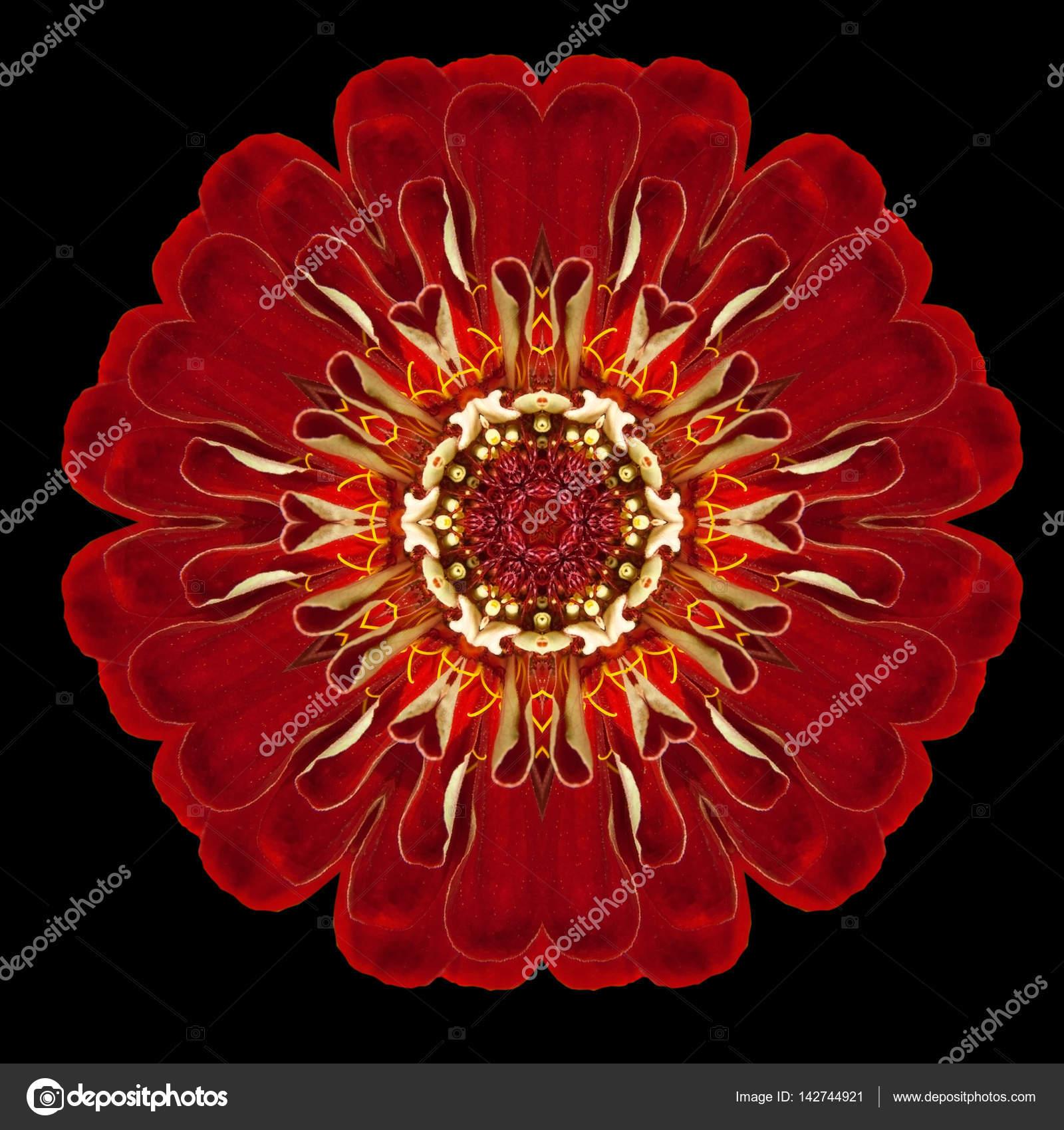 Red Flower Mandala Kaleidoscope Isolated on Black — Stock Photo ...