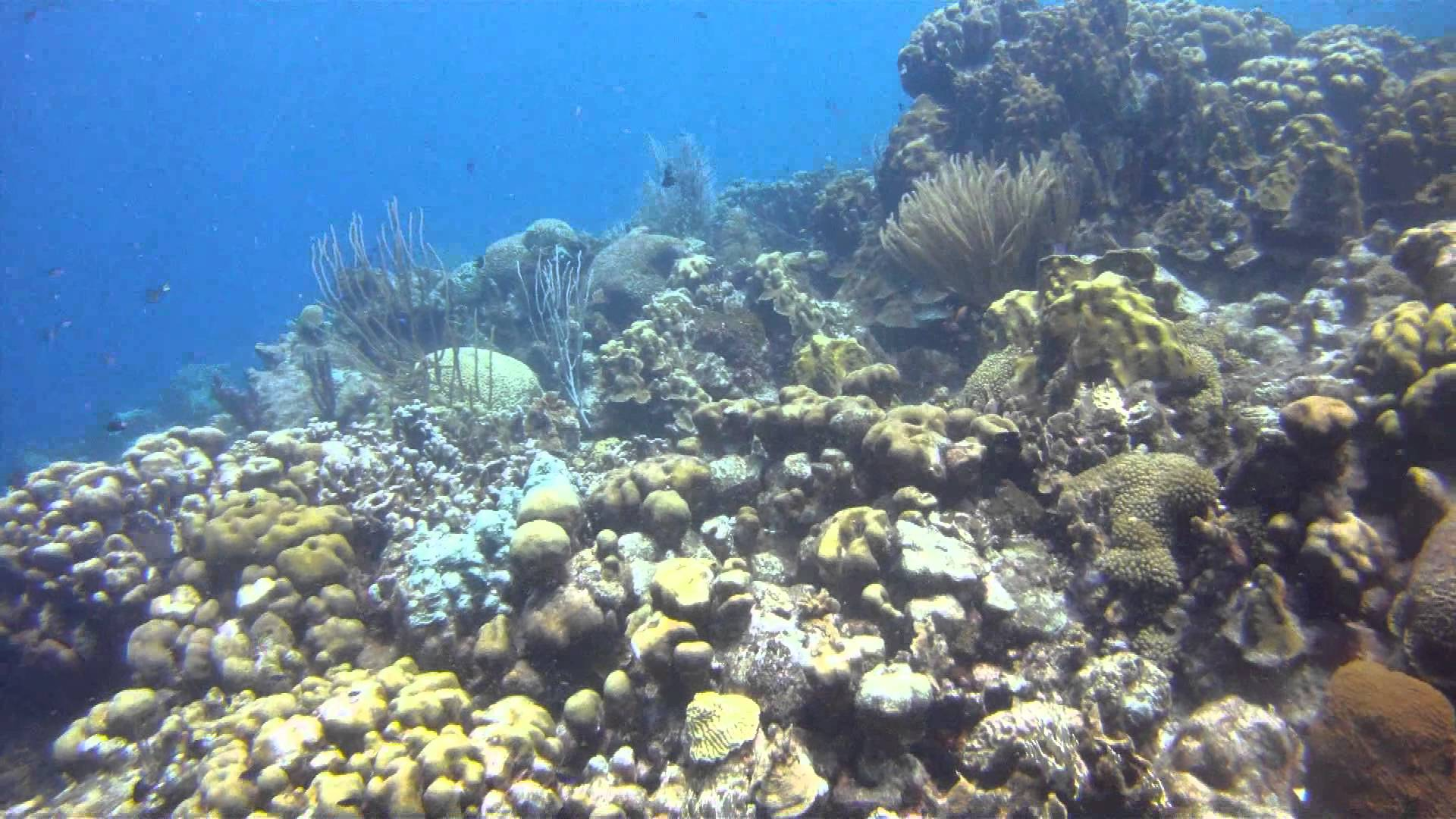 Bonaire - Karpata - YouTube