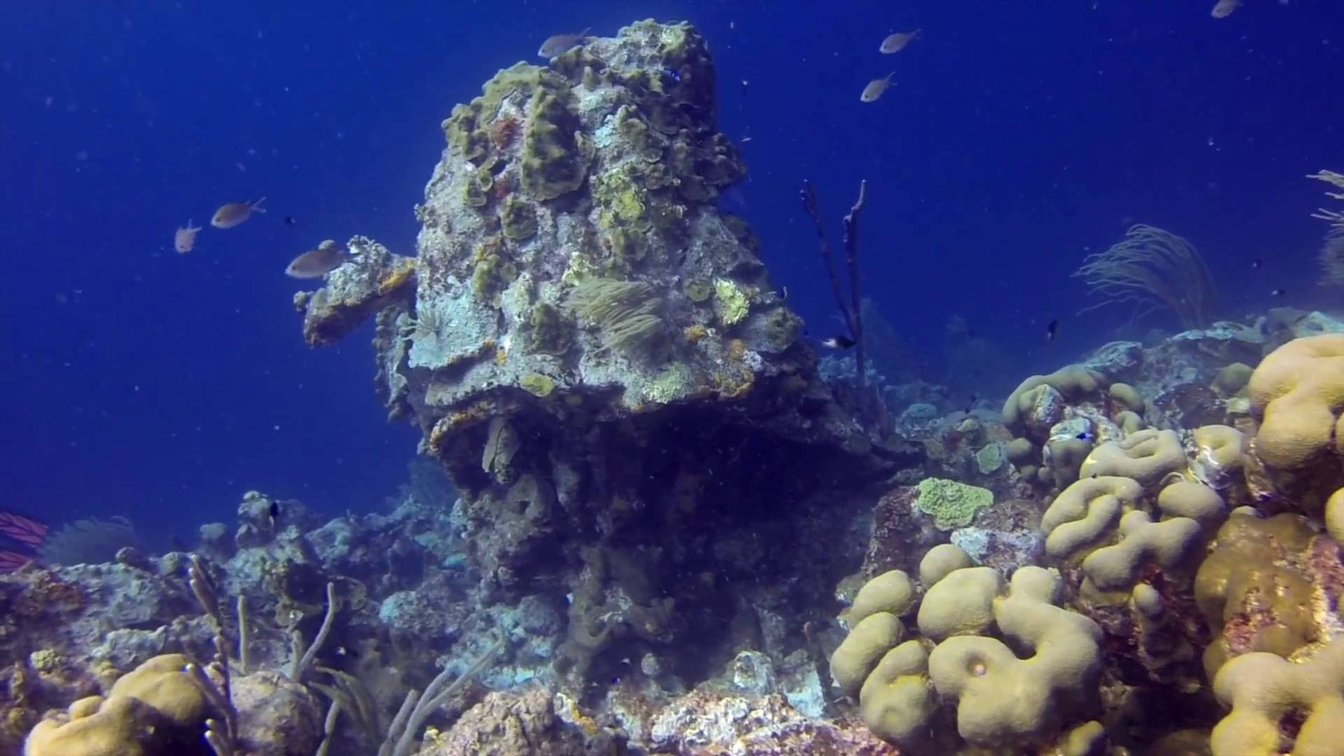 Karpata Scuba Dive-Bonaire, Caribbean - YouTube