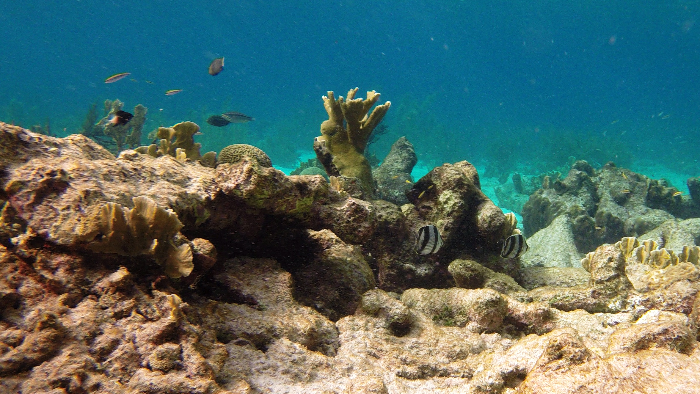 File:Snorkeling Karpata Reef, Bonaire (12841929245).jpg - Wikimedia ...